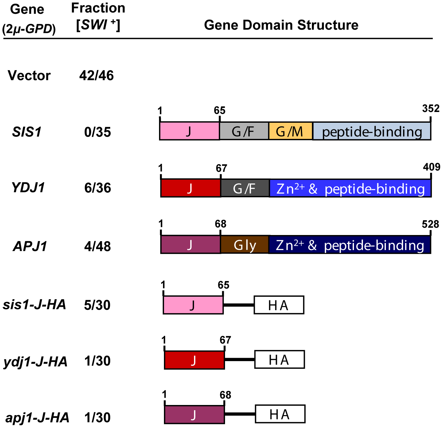 [<i>SWI</i><sup>+</sup>] is sensitive to J-protein or J-domain overexpression.