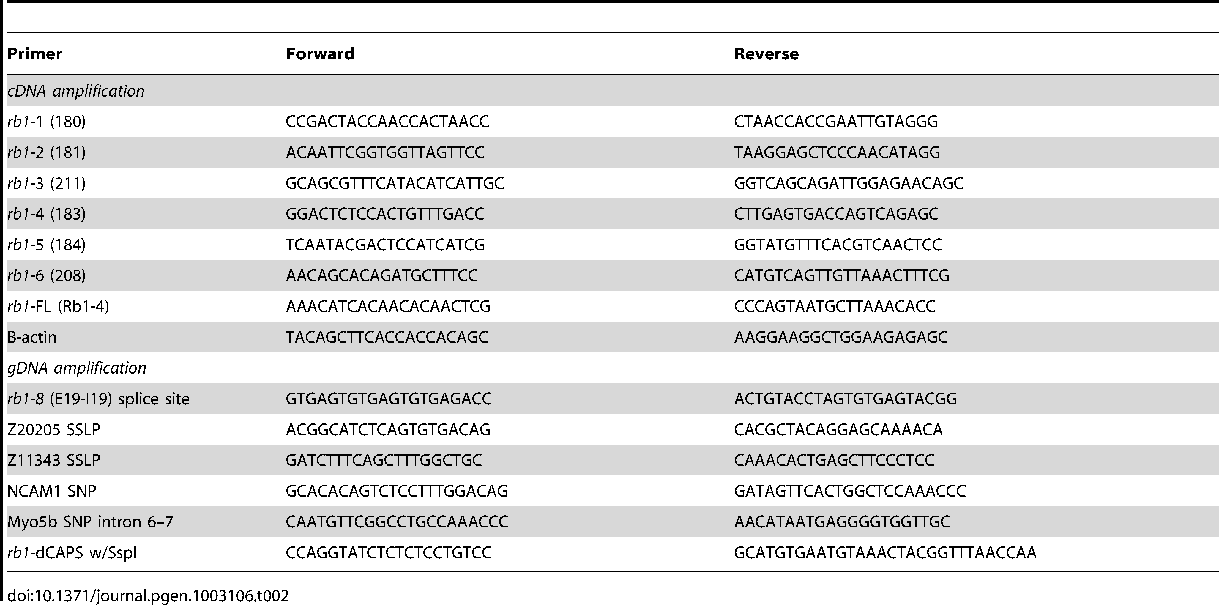 PCR primers for recombination mapping, molecular cloning, and genotyping of <i>rb1<sup>te226a</sup></i>.