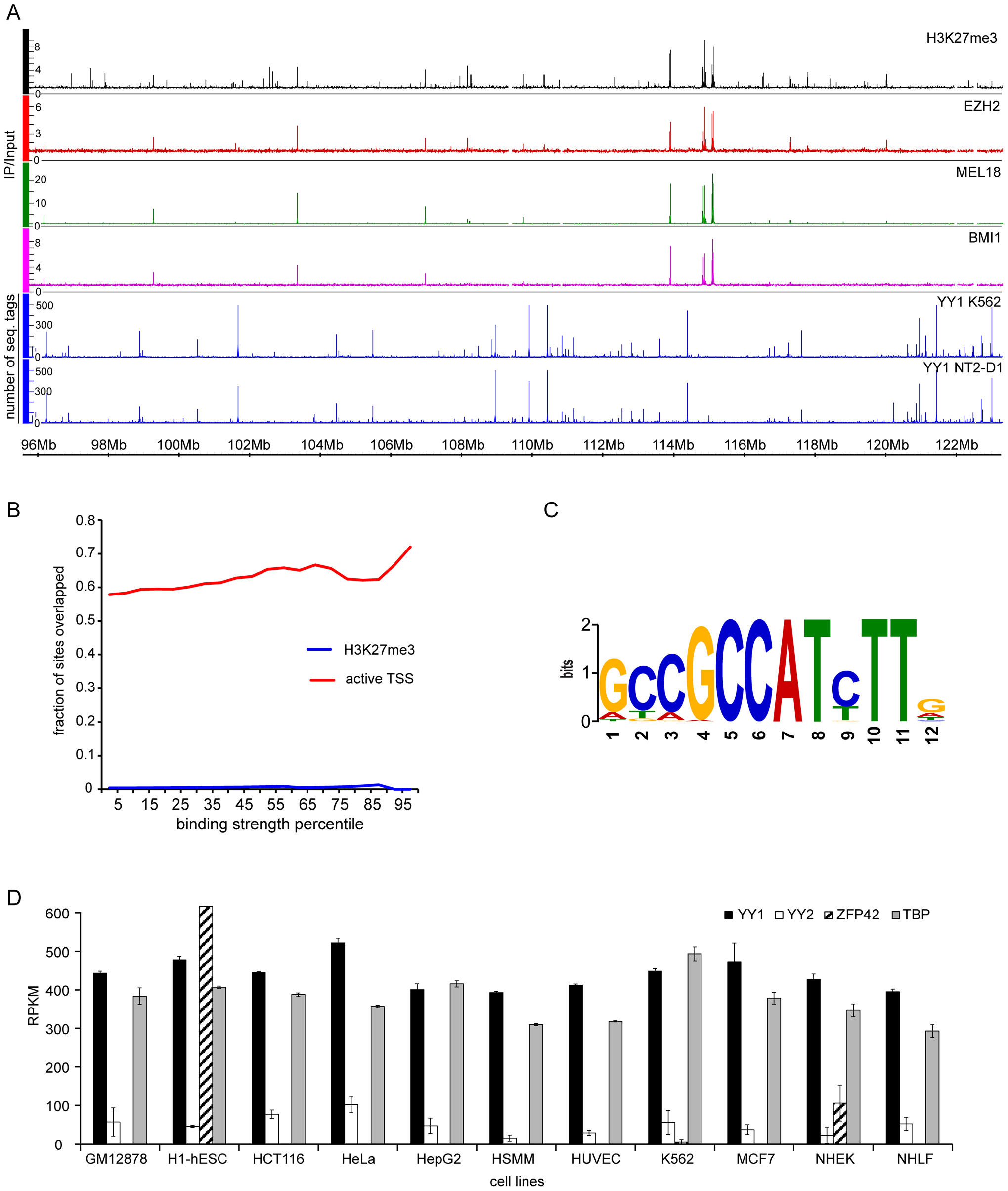 YY1 is not involved in Polycomb silencing in human cells.