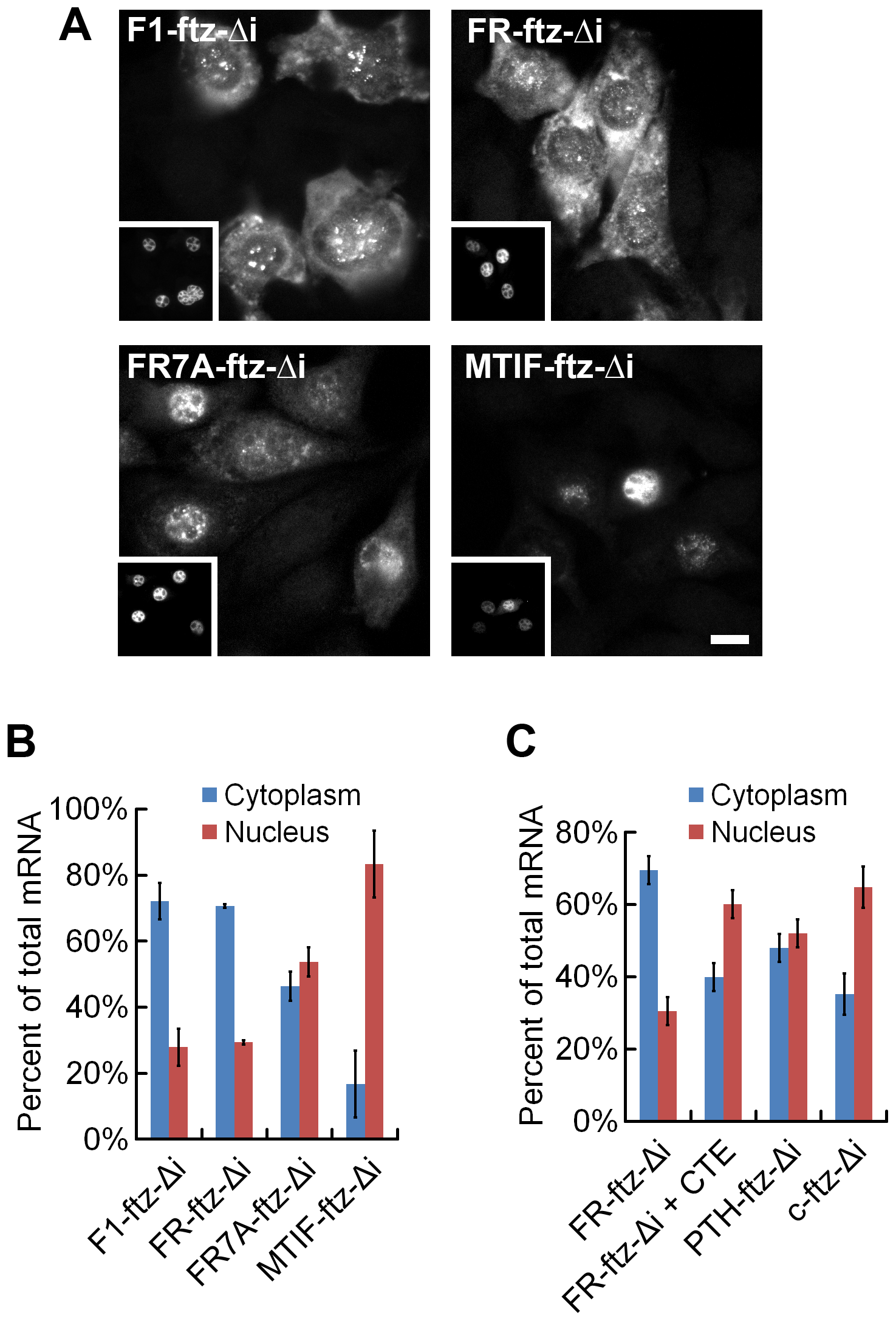 MSCRs derived from 5UI<sup>−</sup> genes promote mRNA nuclear export.