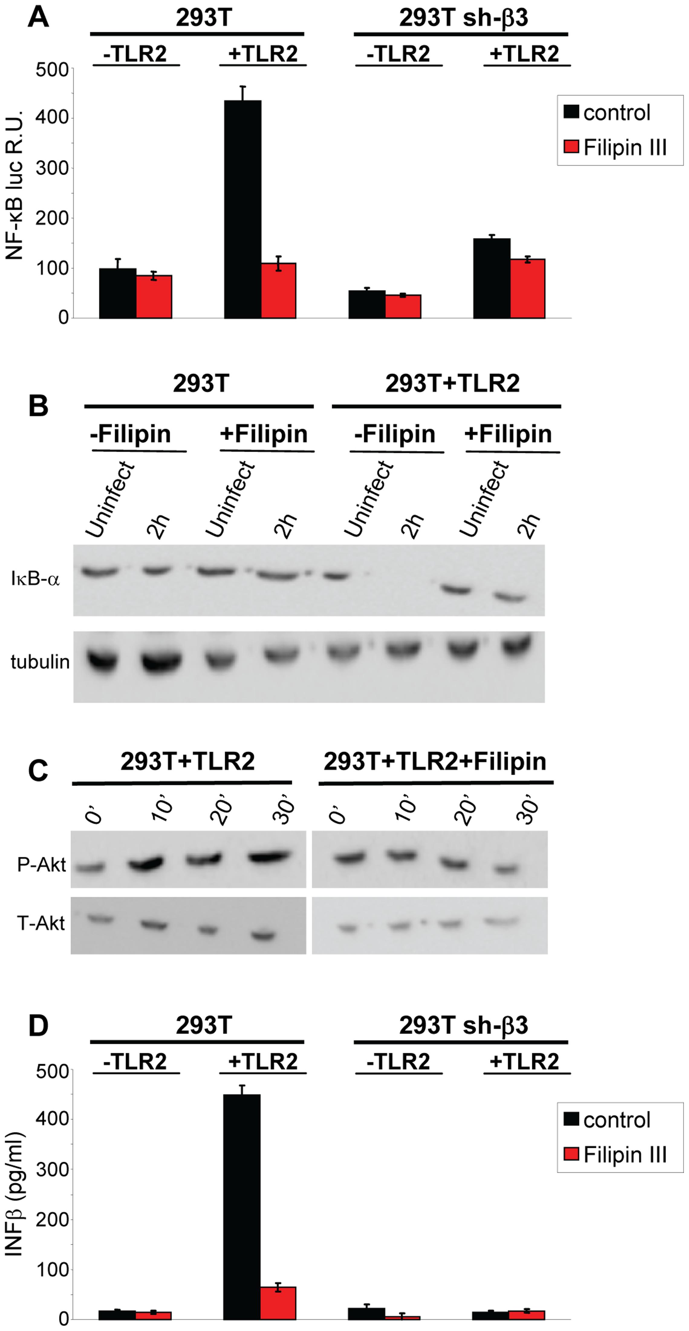 Lipid rafts perturbation by the cholesterol-binding filipin III blocks the innate response to HSV.