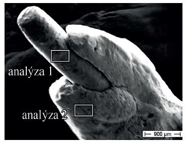 Kořenový čep s vyznačením analyzovaných míst