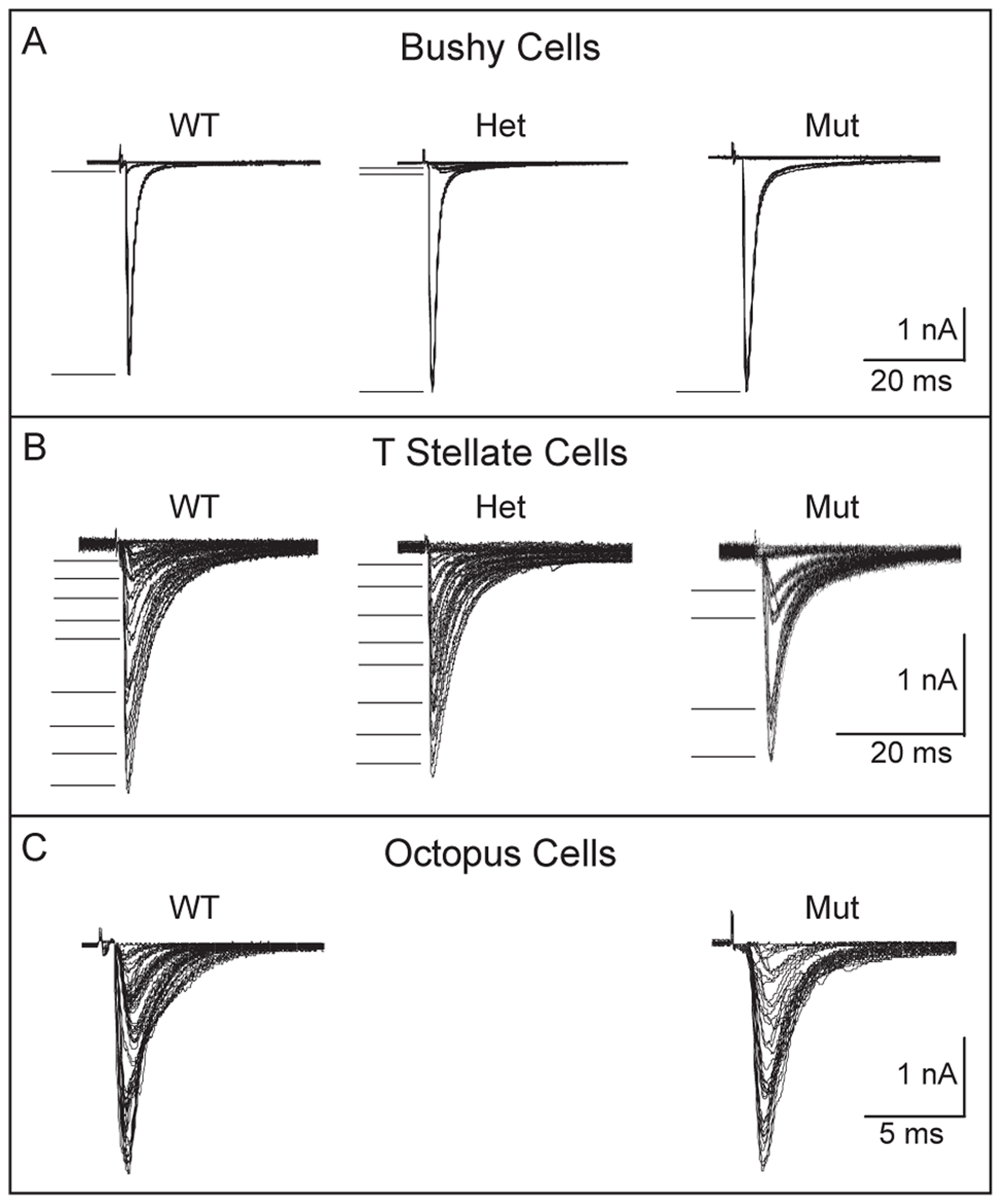 Convergence of SGNs onto bushy and T stellate cells tends to be lower in <i>Npr2</i> mutants.