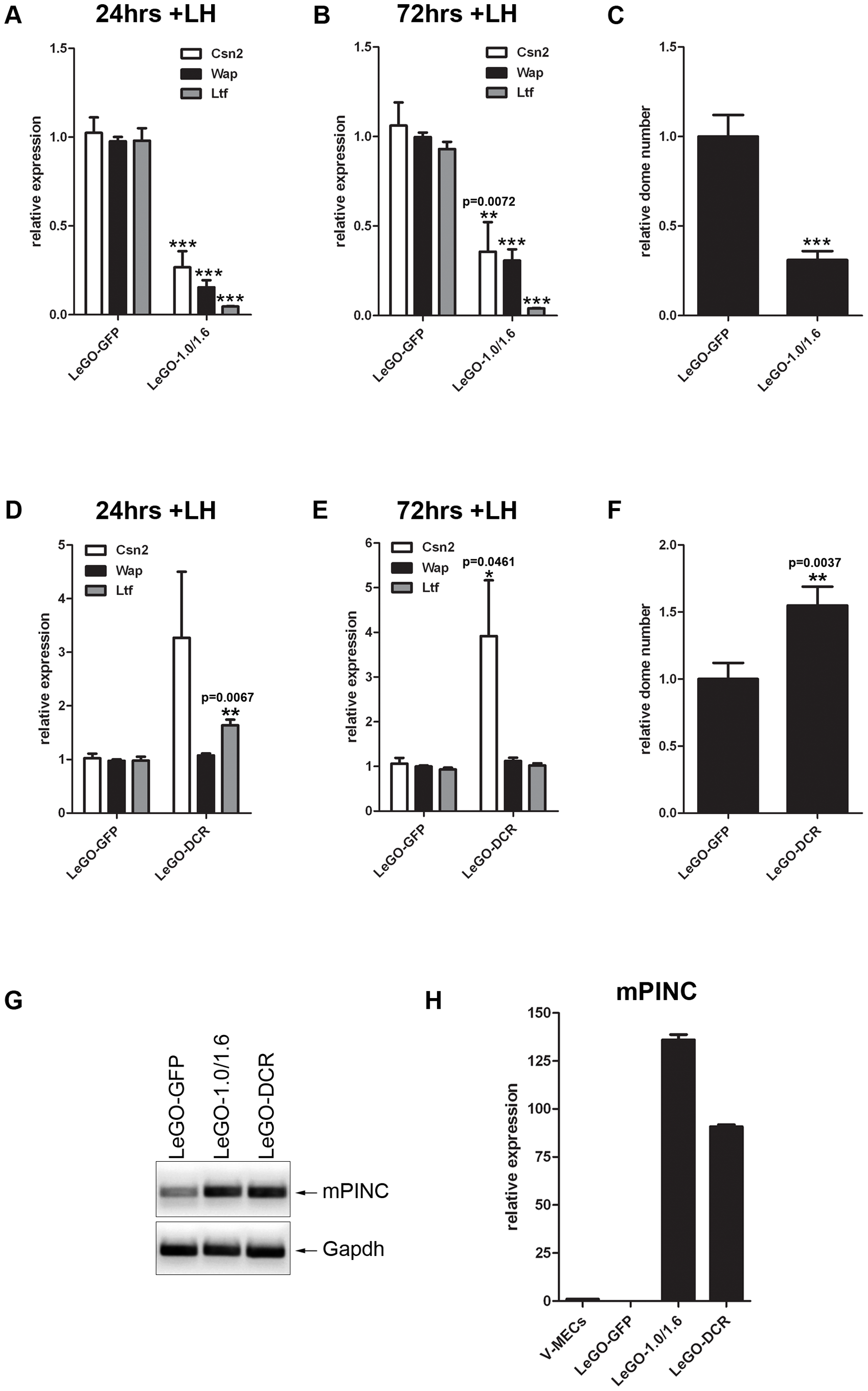 Overexpression of <i>mPINC</i> inhibits differentiation of HC11 cells.