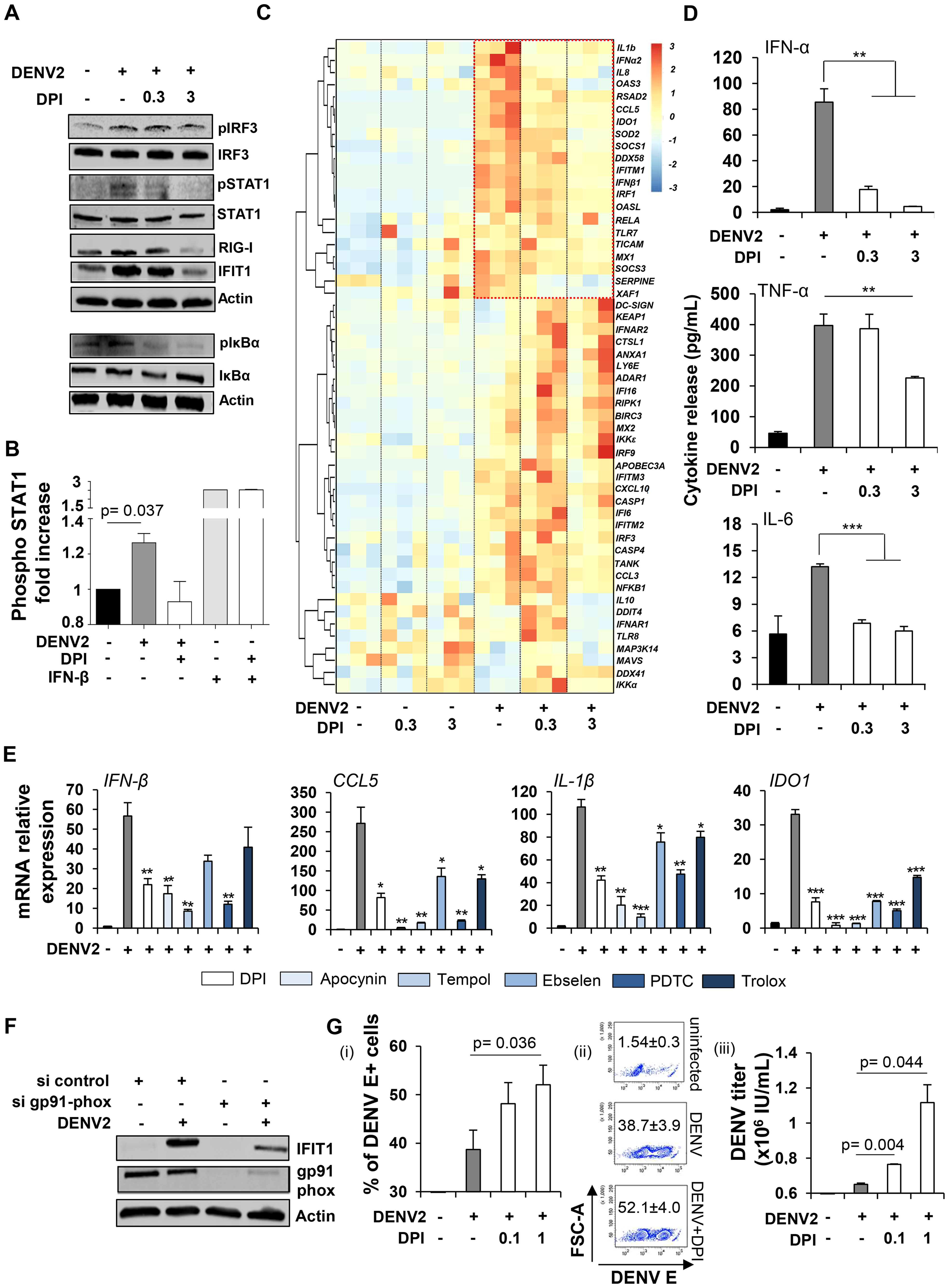 Cellular oxidative stress response is required to mediate DENV-induced innate immune responses.