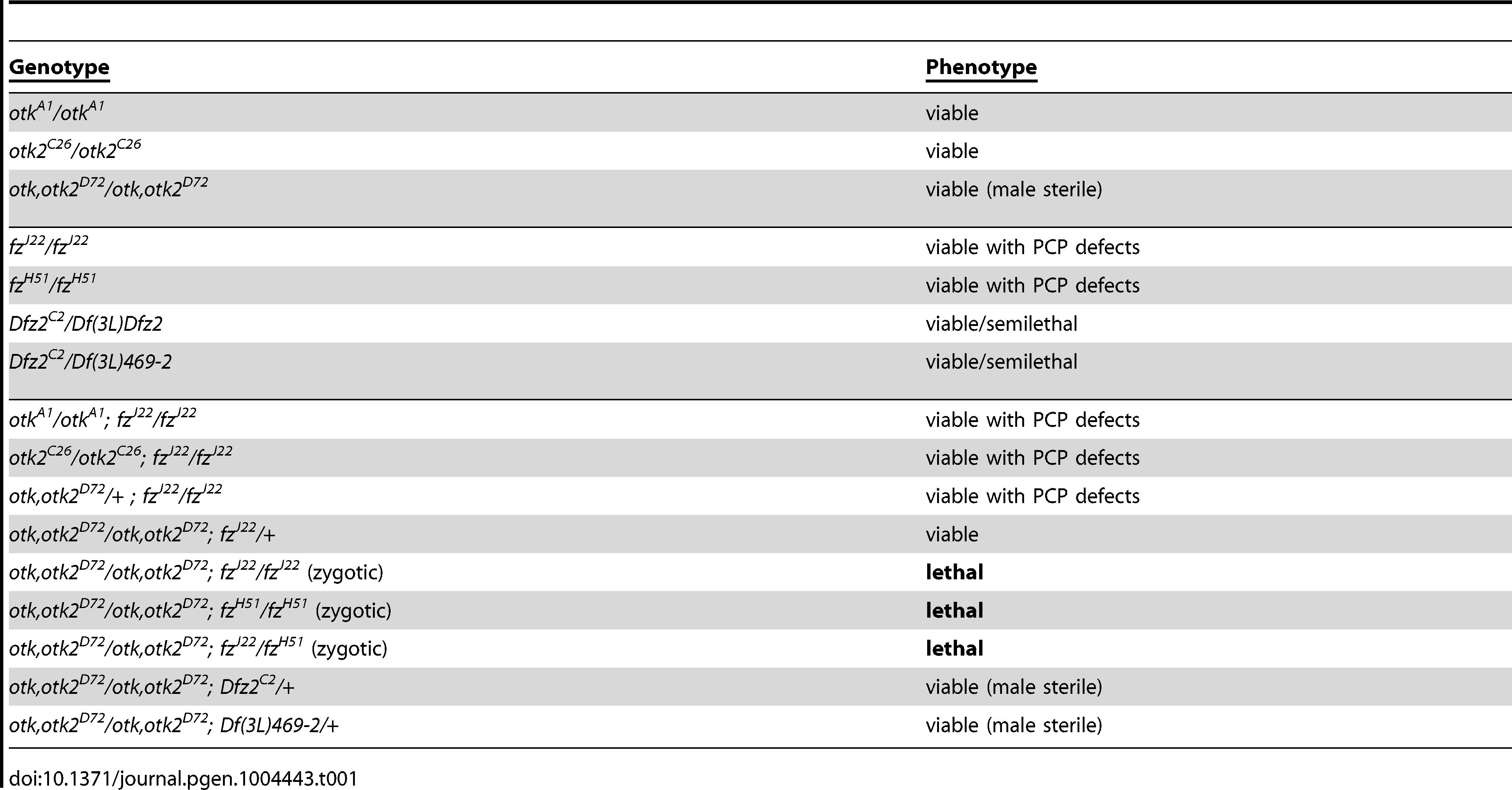 The <i>otk, otk2<sup>D72</sup></i> double mutant genetically interacts with <i>fz</i>.