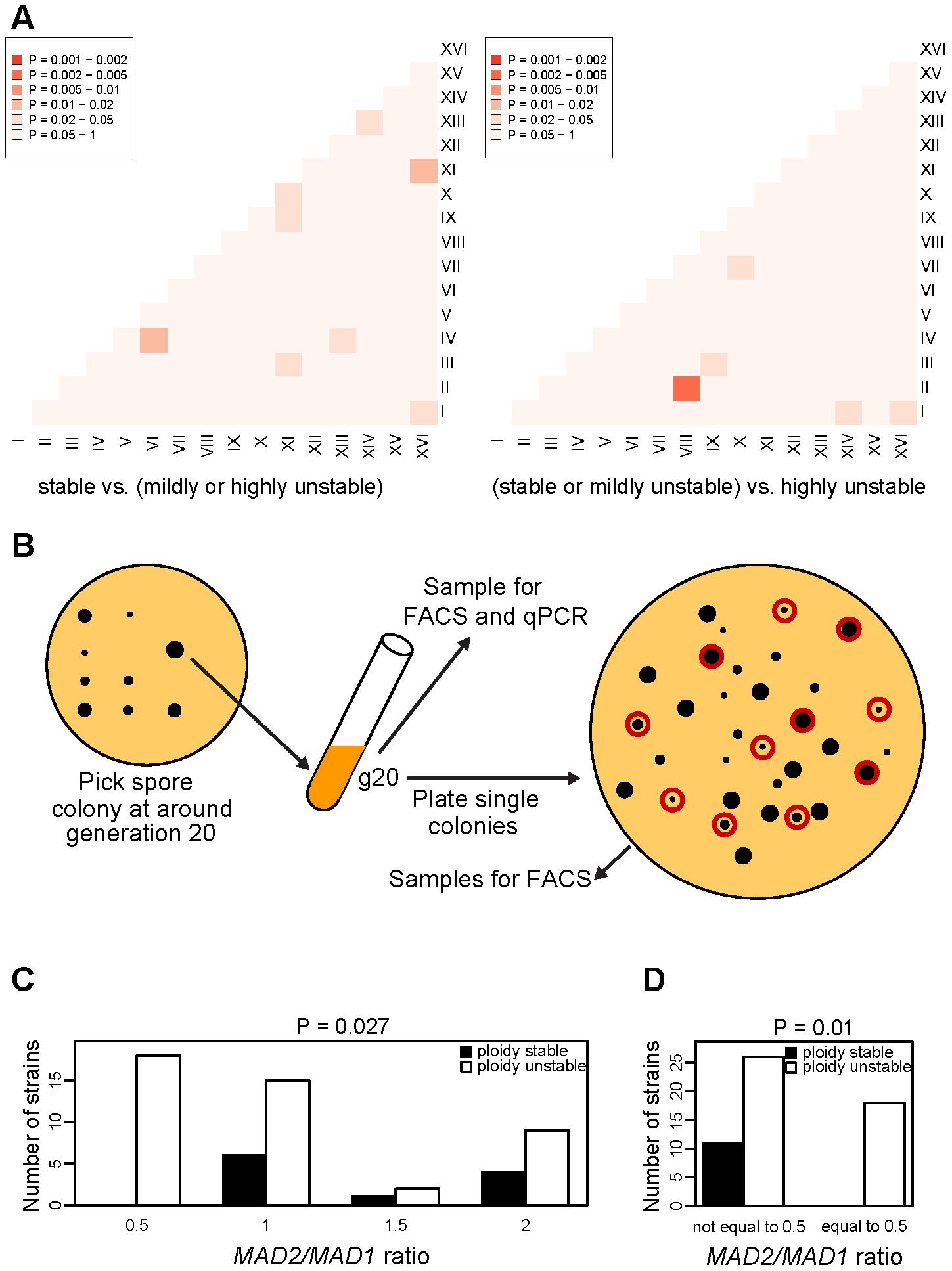 Association of chromosome copy number imbalance with CIN.