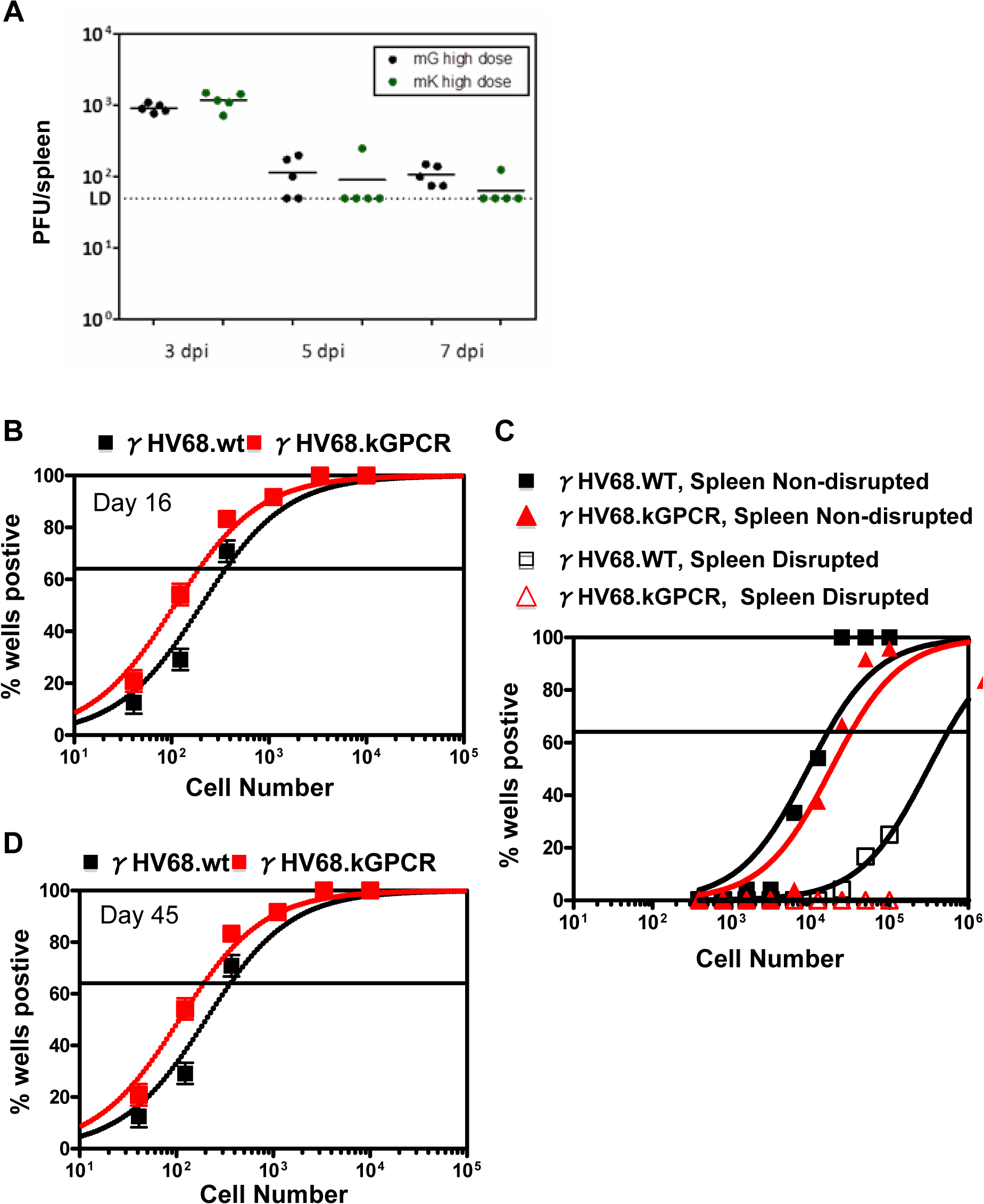 Acute and latent infection of γHV68 in mouse.