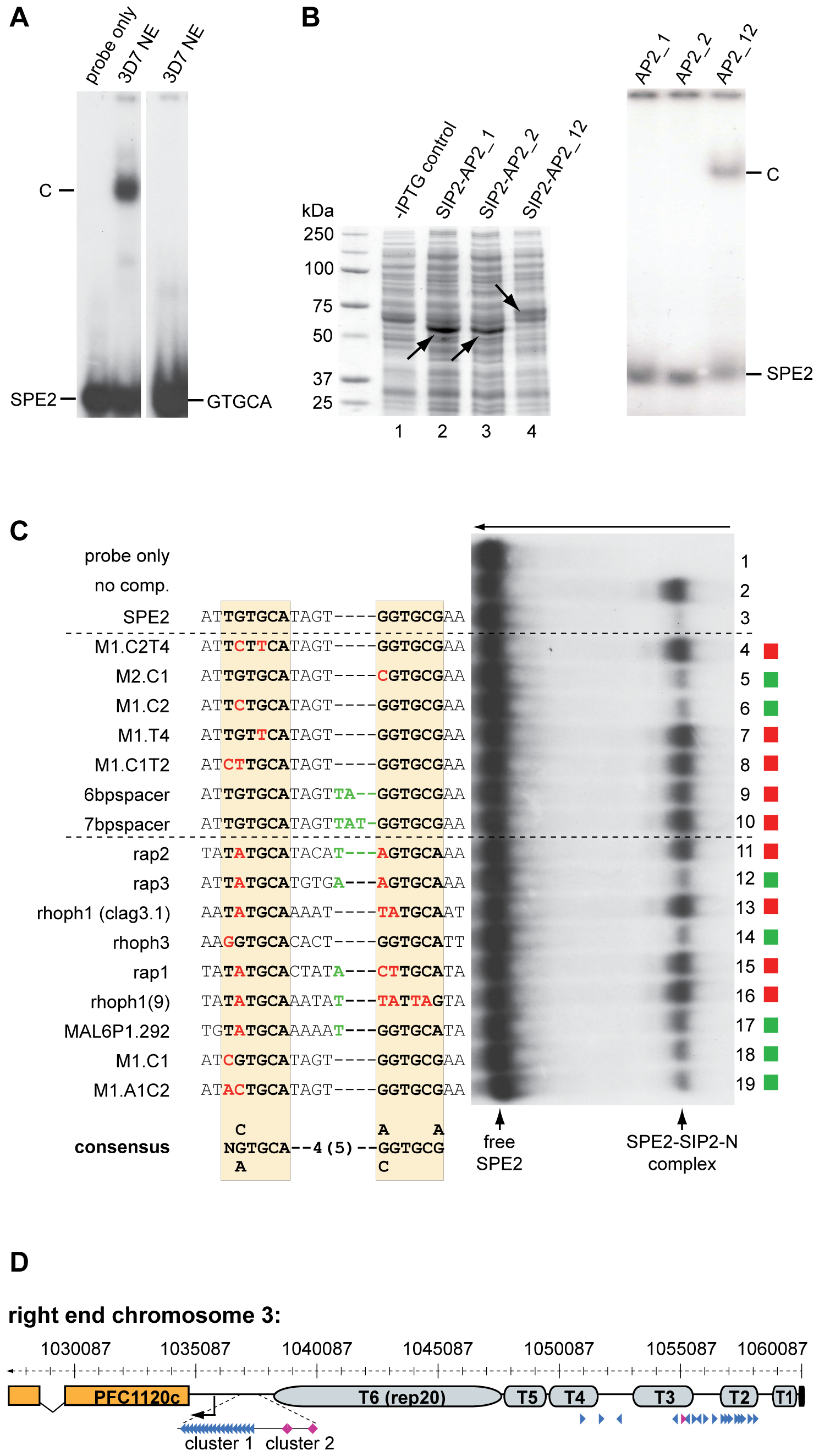 Binding of PfSIP2-N to SPE2 is highly sequence-specific and requires a bipartite motif and both adjacent AP2 domains.