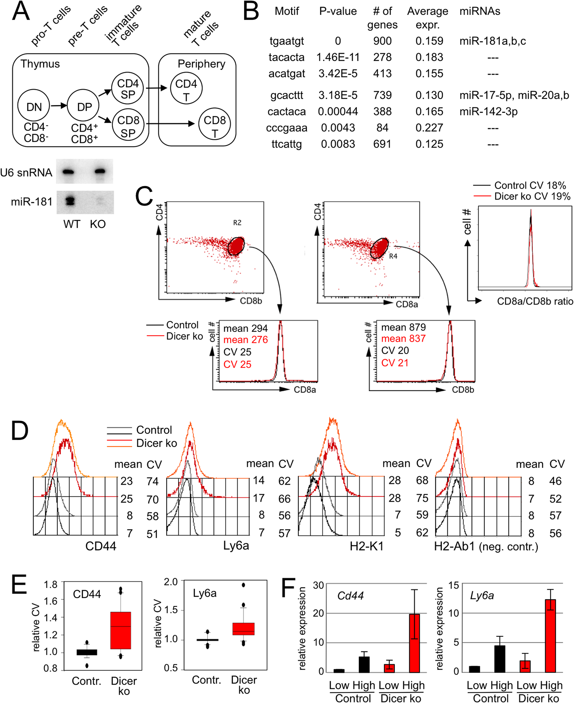 microRNA-dependent regulation of gene expression in developing thymocytes.