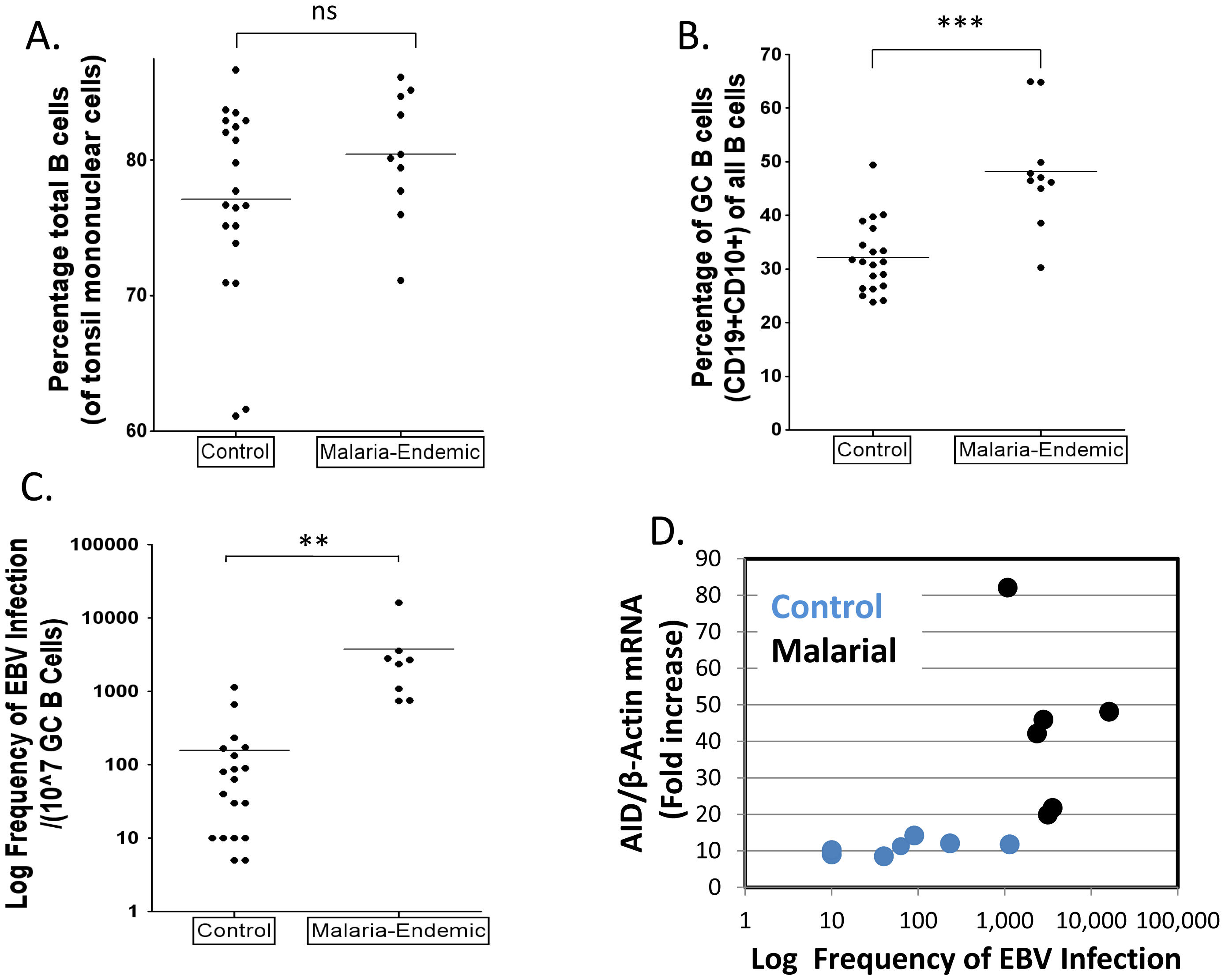 Higher levels of EBV infected cells in tonsil GCs from individuals infected with <i>P. falciparum</i> malaria compared to controls.
