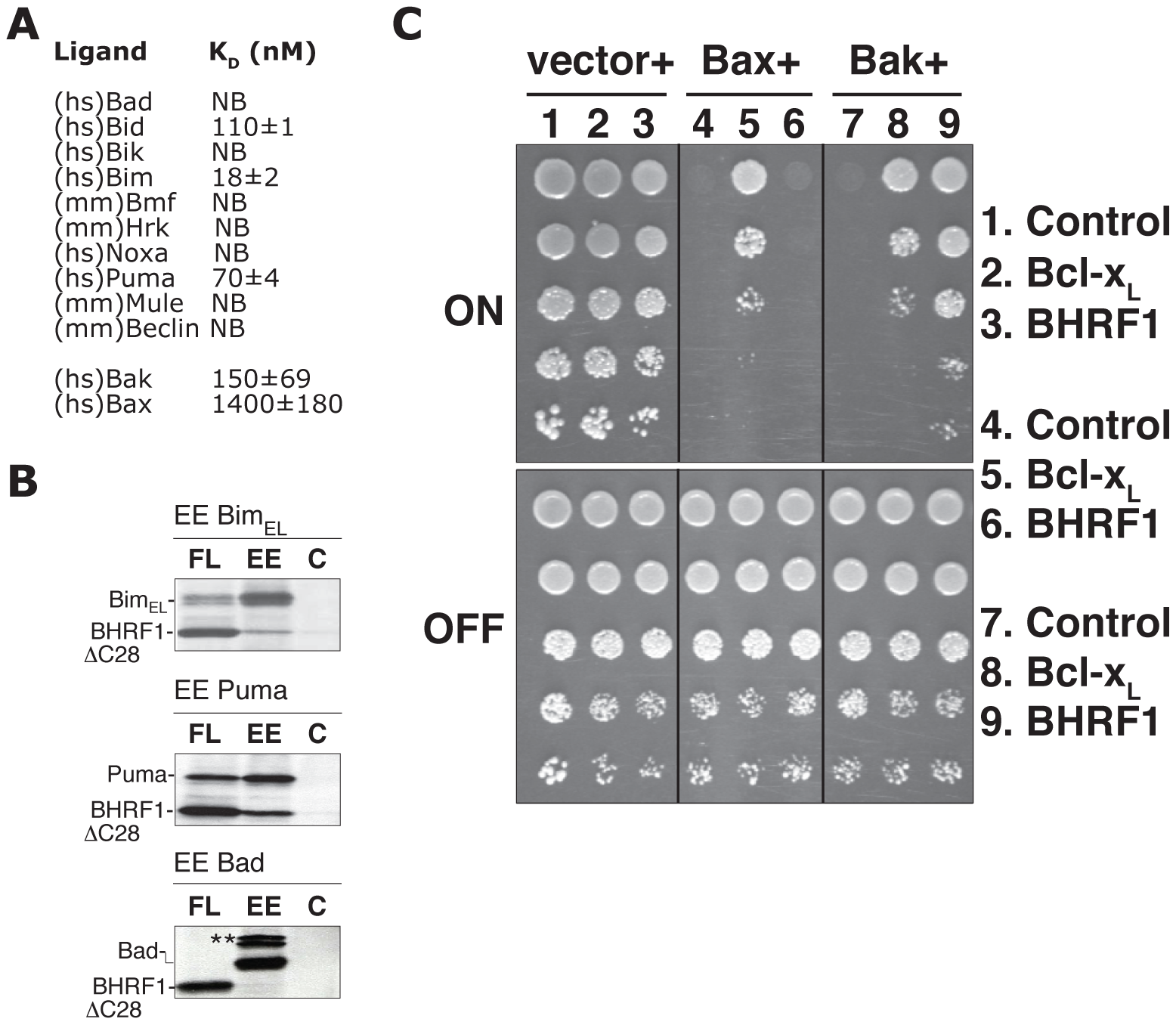 BHRF1 binds a subset of pro-apoptotic Bcl-2 family proteins to counter apoptosis.