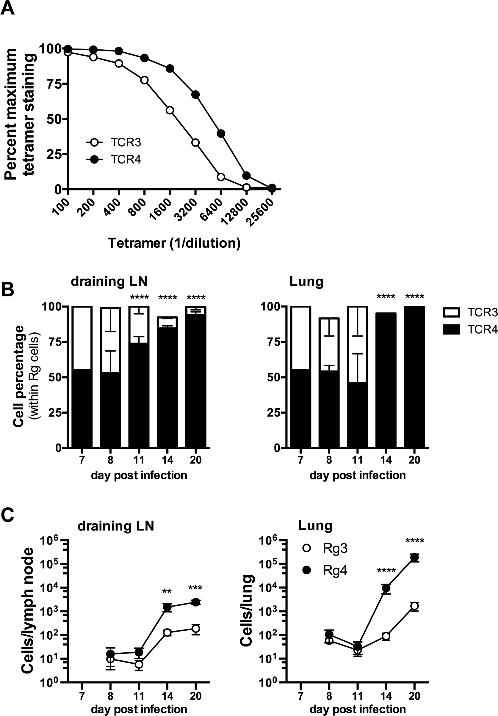 Differences in TCR affinity can lead to clonotypic dominance during infection.