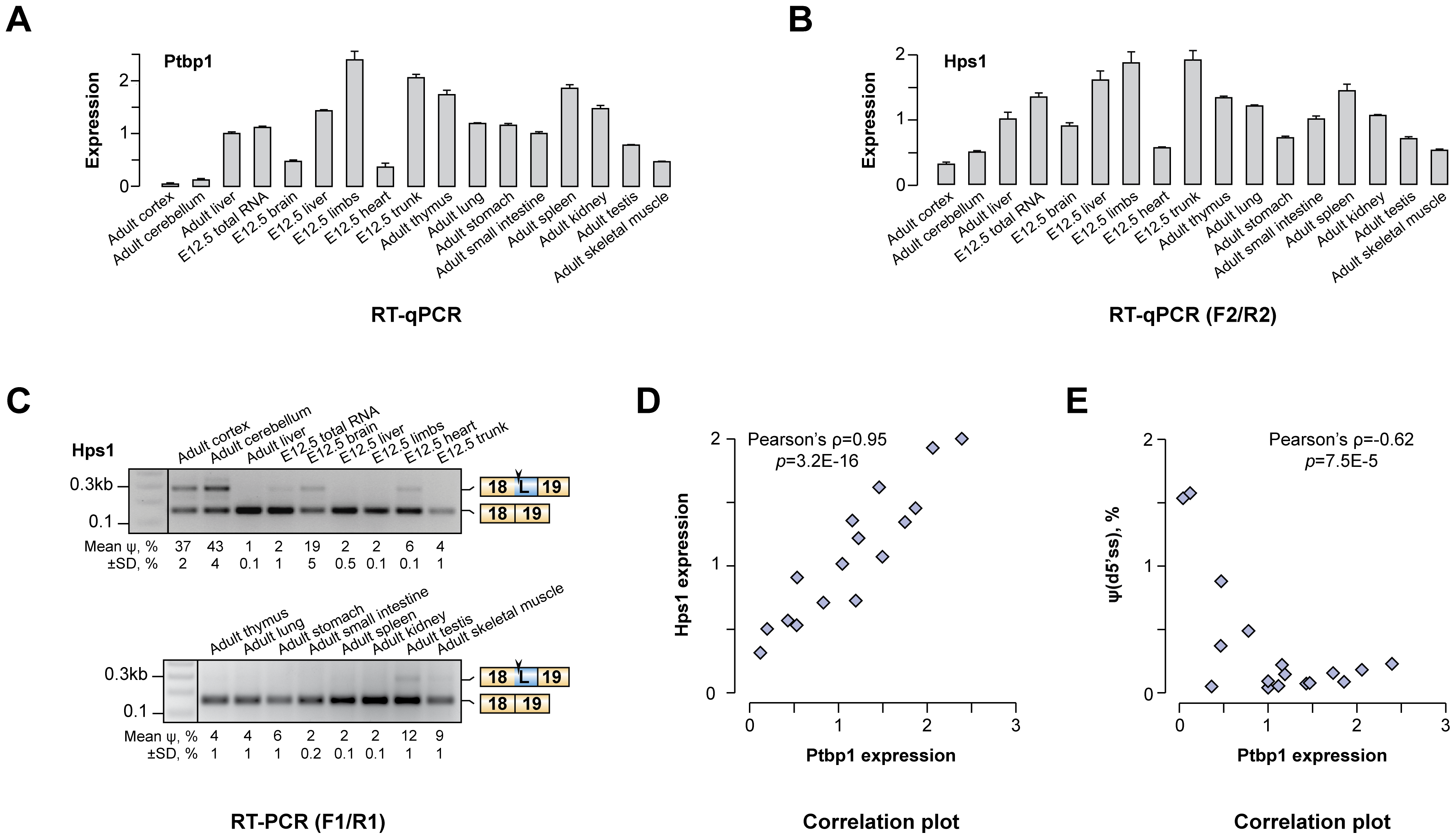 Hps1 is co-expressed with Ptbp1 <i>in vivo</i>.