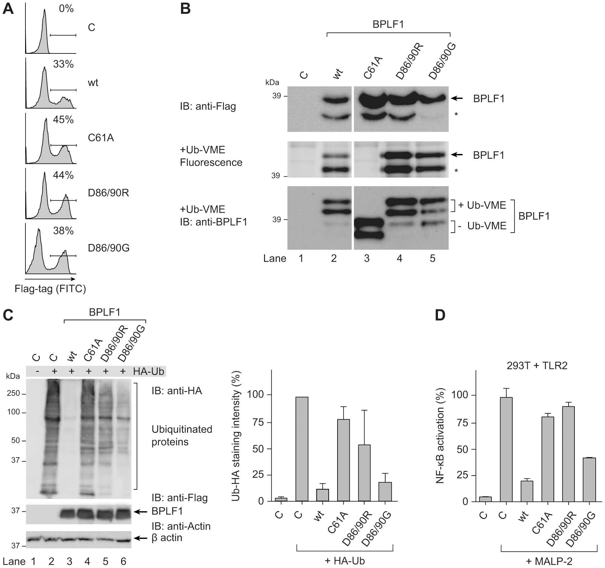 BPLF1-mediated modulation of TLR signaling correlates with deubiquitinase activity.