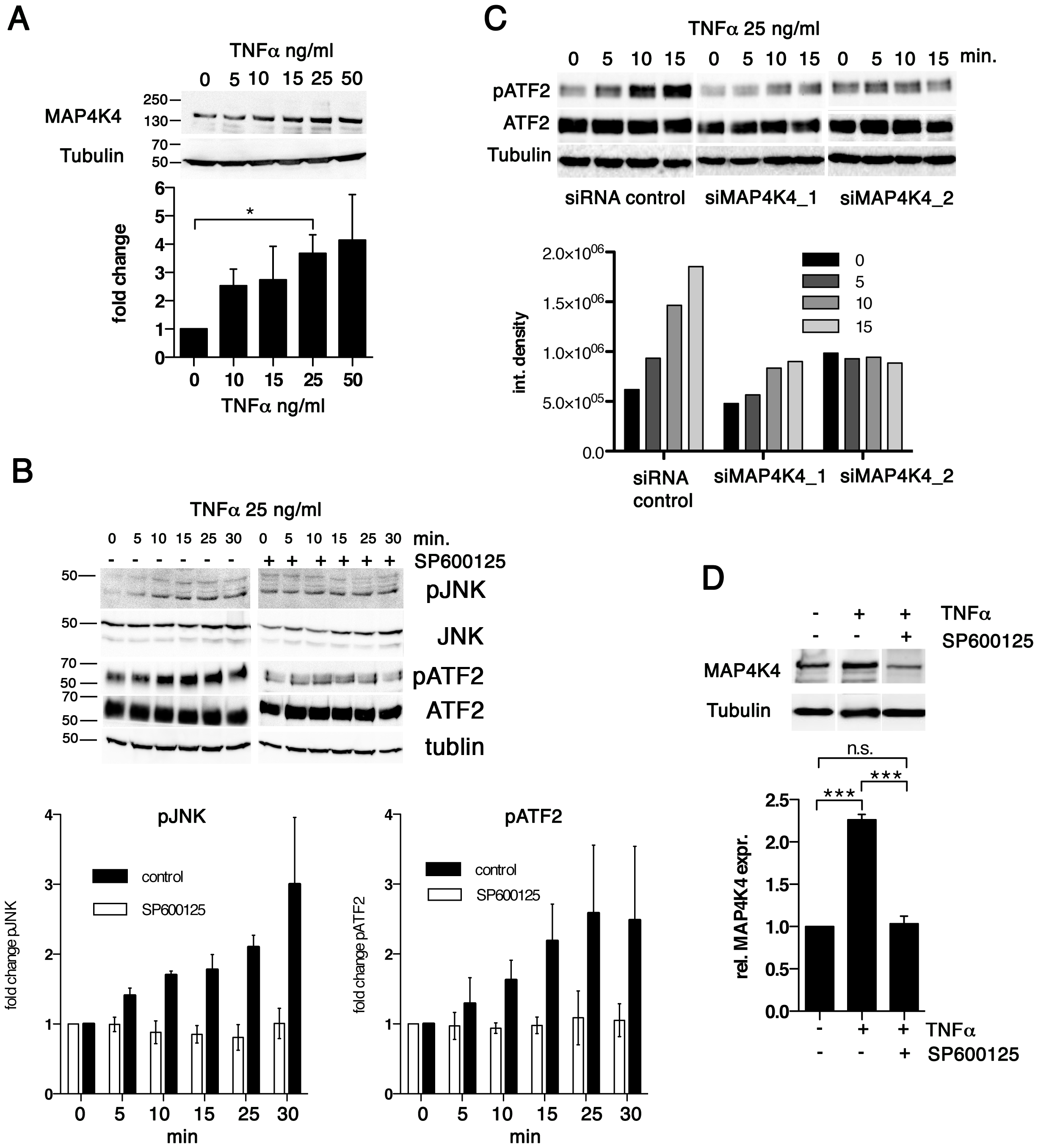 TNFα promotes increased MAP4K4 protein expression through the JNK pathway.