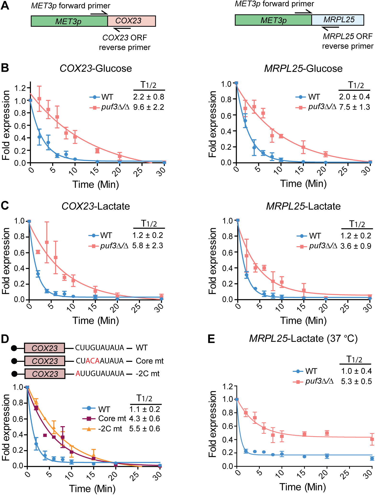 <i>C</i>. <i>albicans</i> Puf3 is a repressor of mRNA stability in glucose and lactate growth conditions.