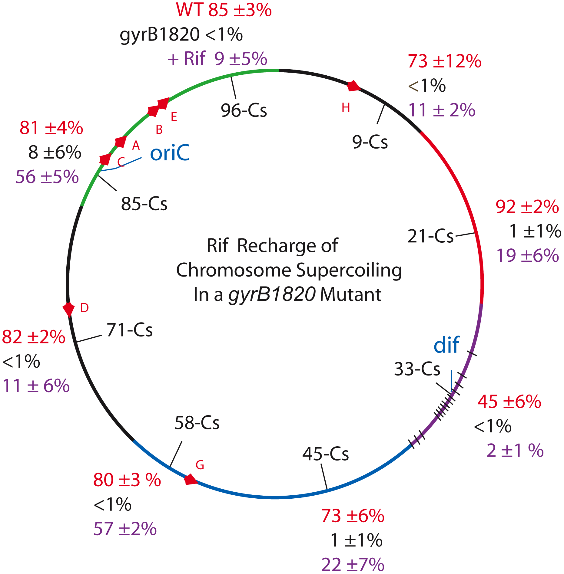 Interrupting transcription causes a dramatic rebound in resolution for strains carrying the GyrB1820 gyrase.