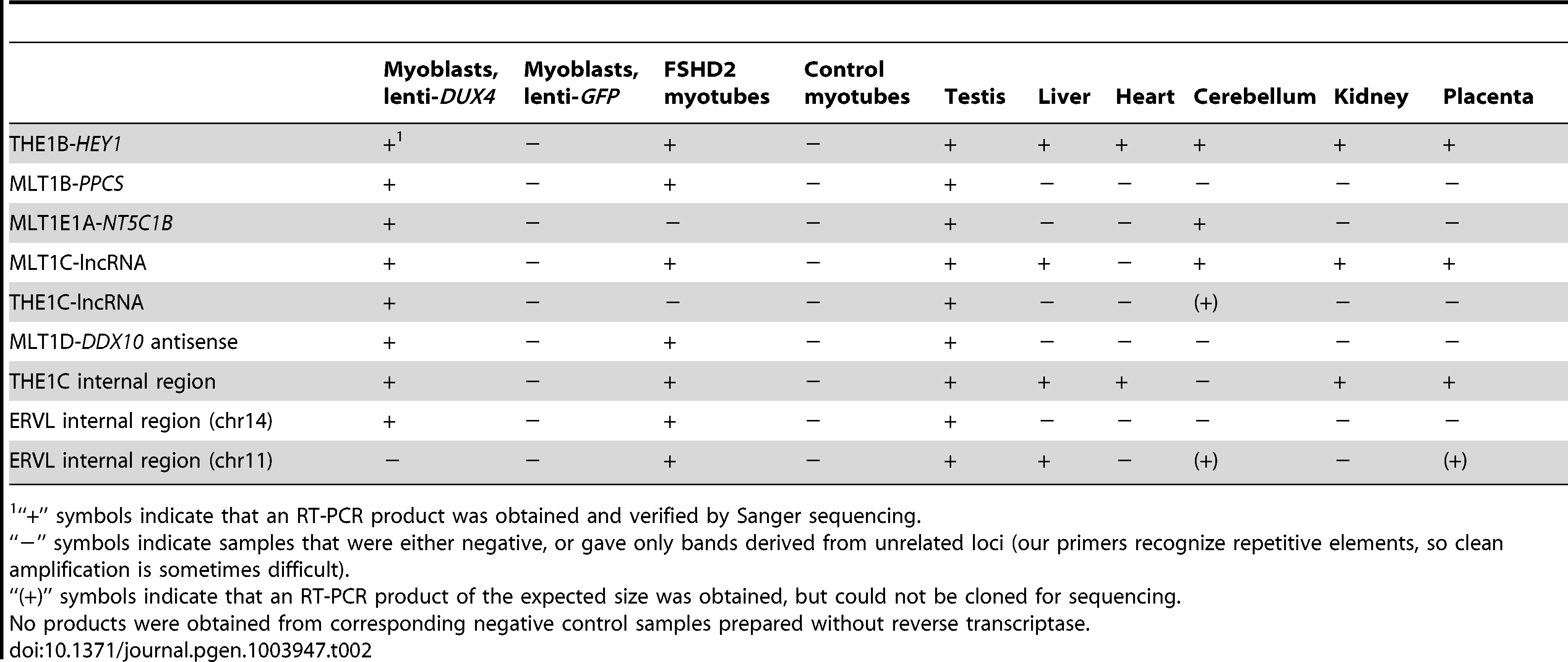 RT-PCR confirms novel transcripts and shows their presence in testis and FHSD patient cells.