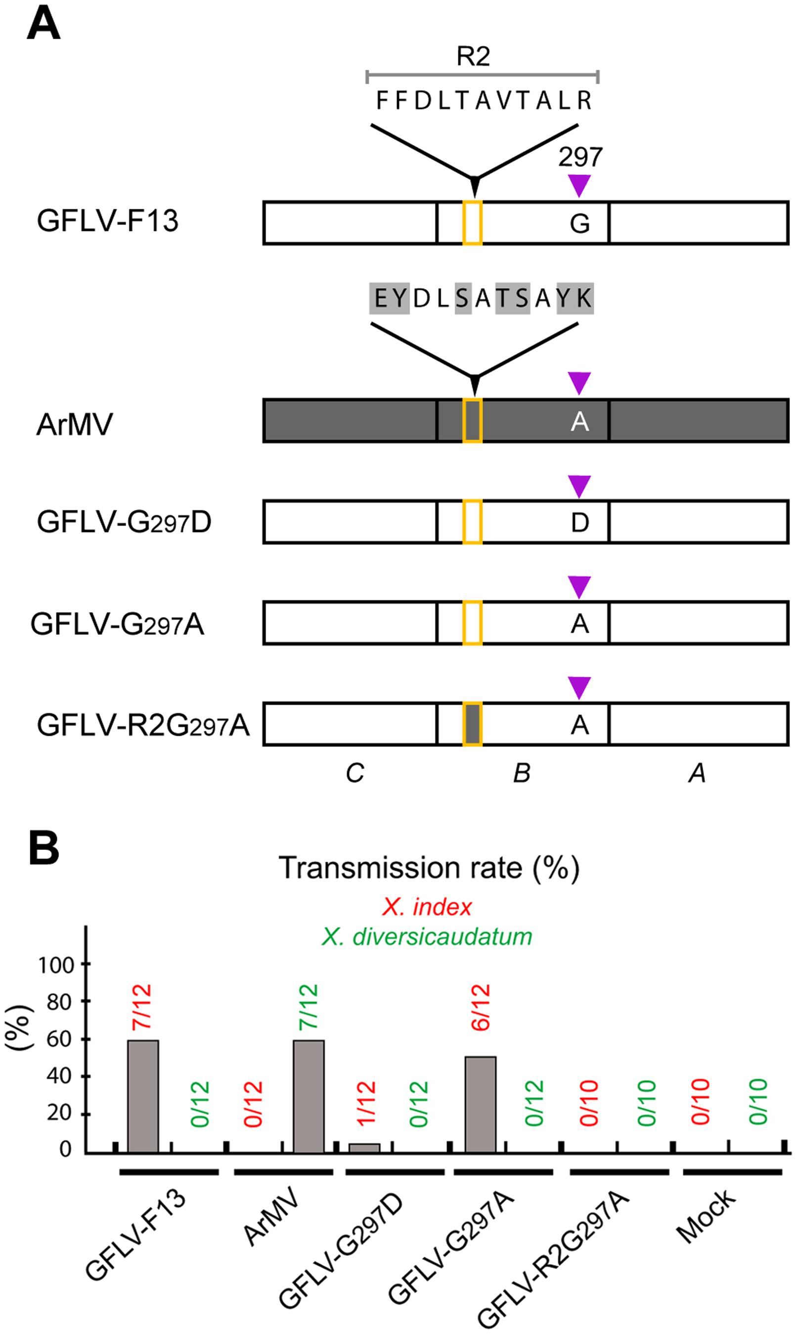 Nematode transmission of GFLV CP mutants.