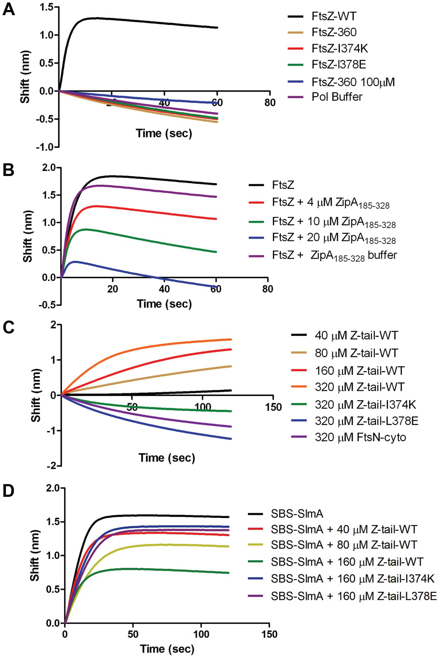 Further analysis of FtsZ-SlmA binding using biolayer interferometry.