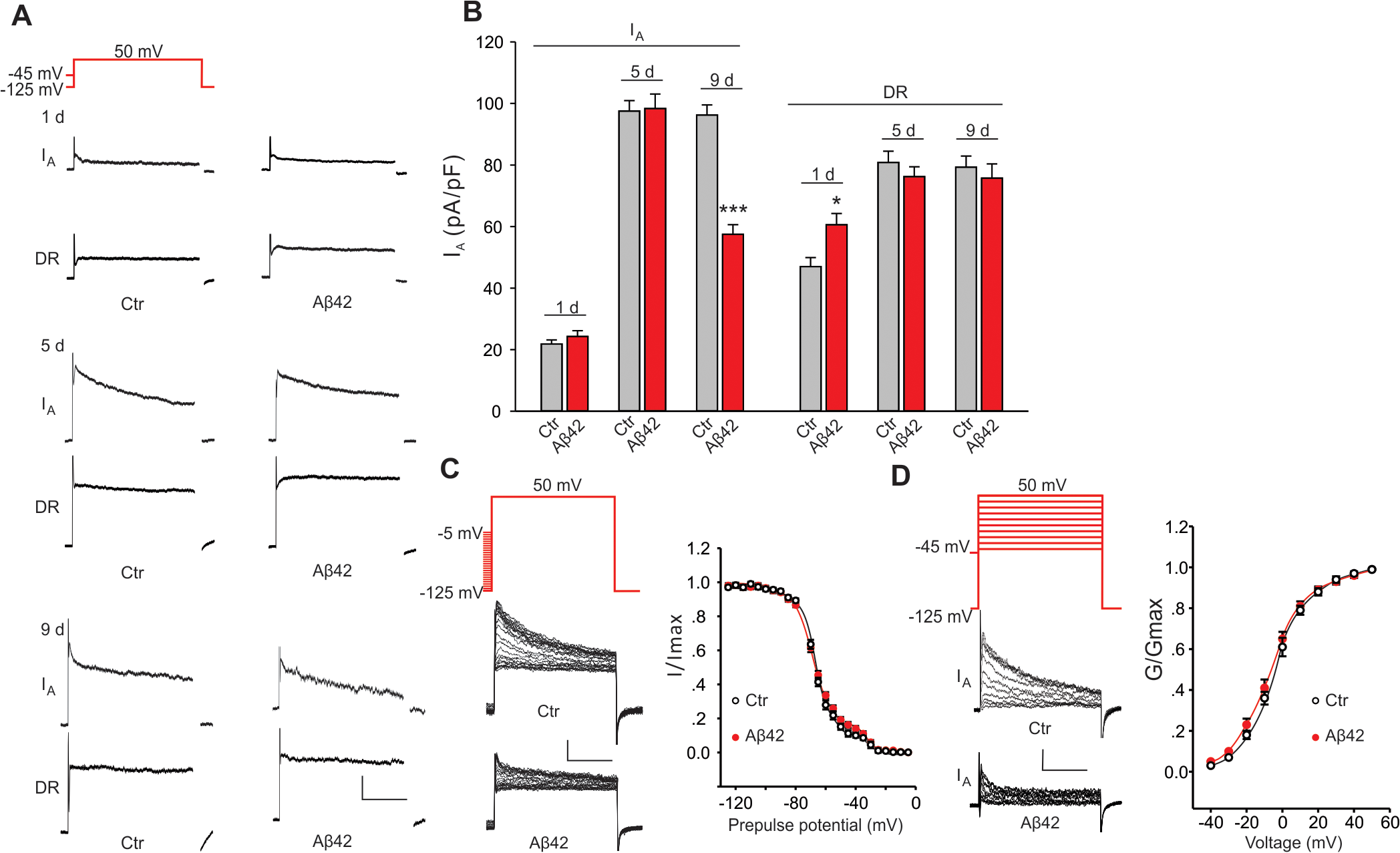 Aβ42-induced changes in voltage-dependent K<sup>+</sup> currents in primary neurons.