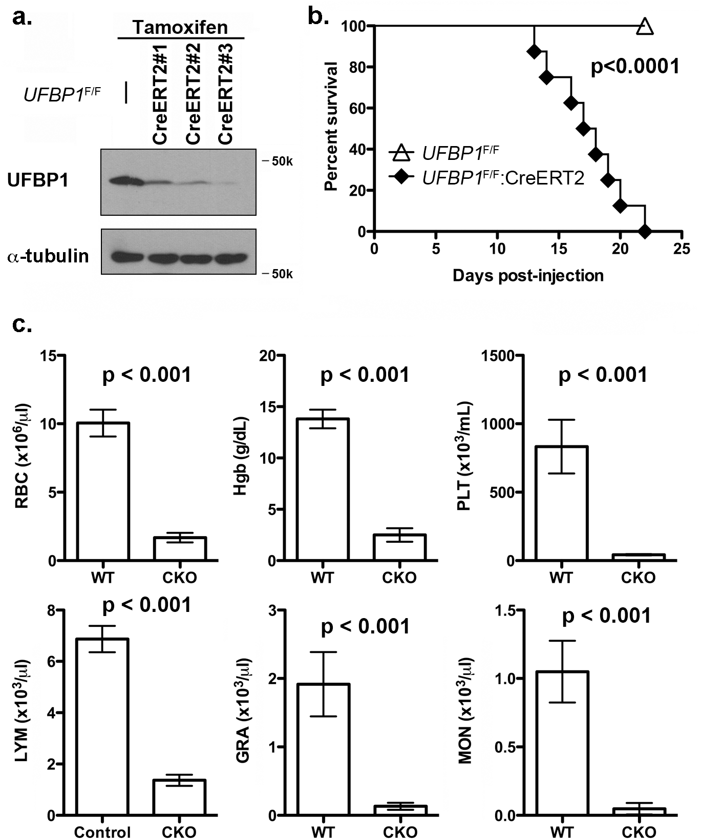 Loss of UFBP1 in adult mice results in severe pancytopenia and animal death.