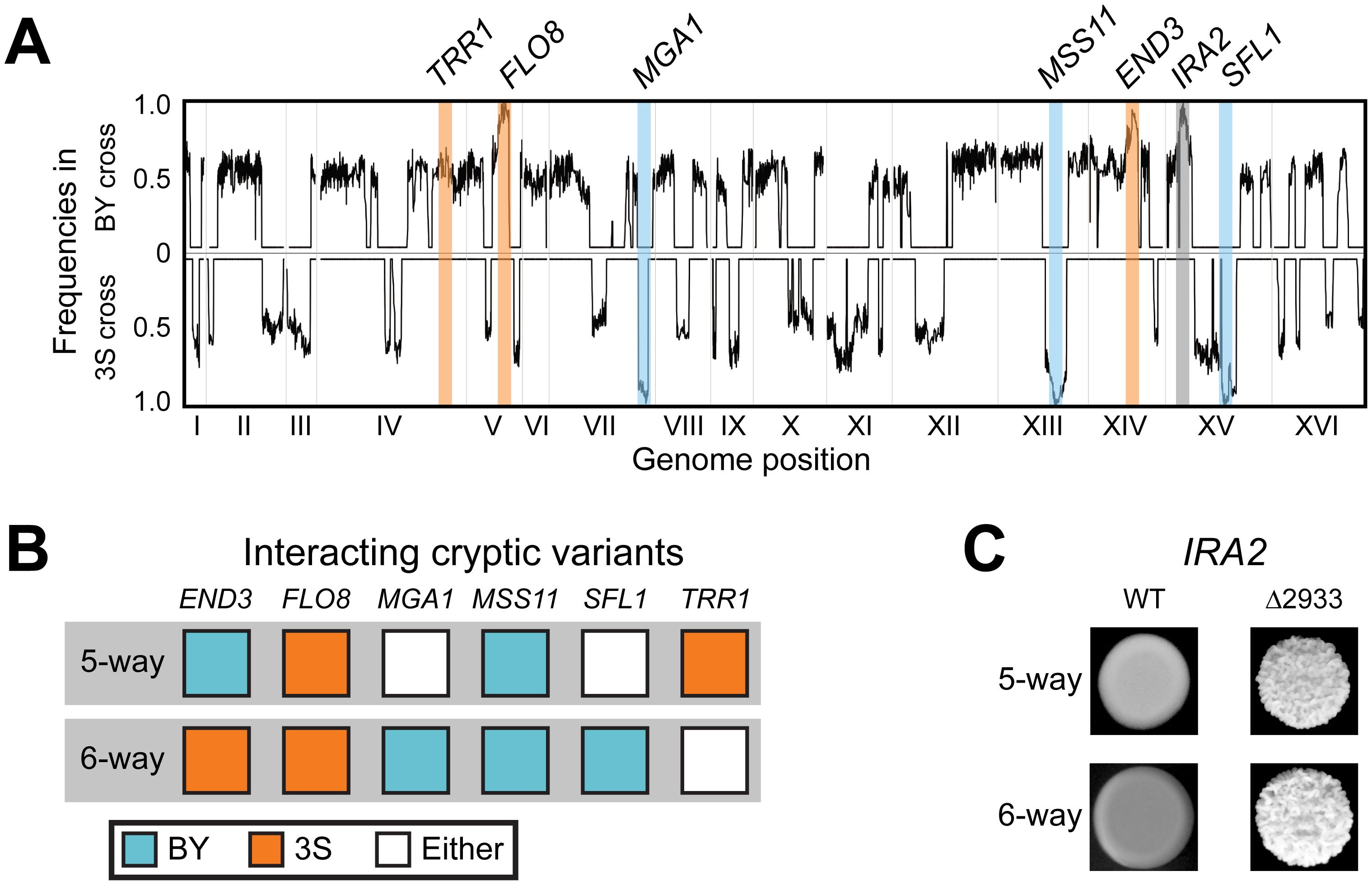 Characterization of the six-way genetic interaction.