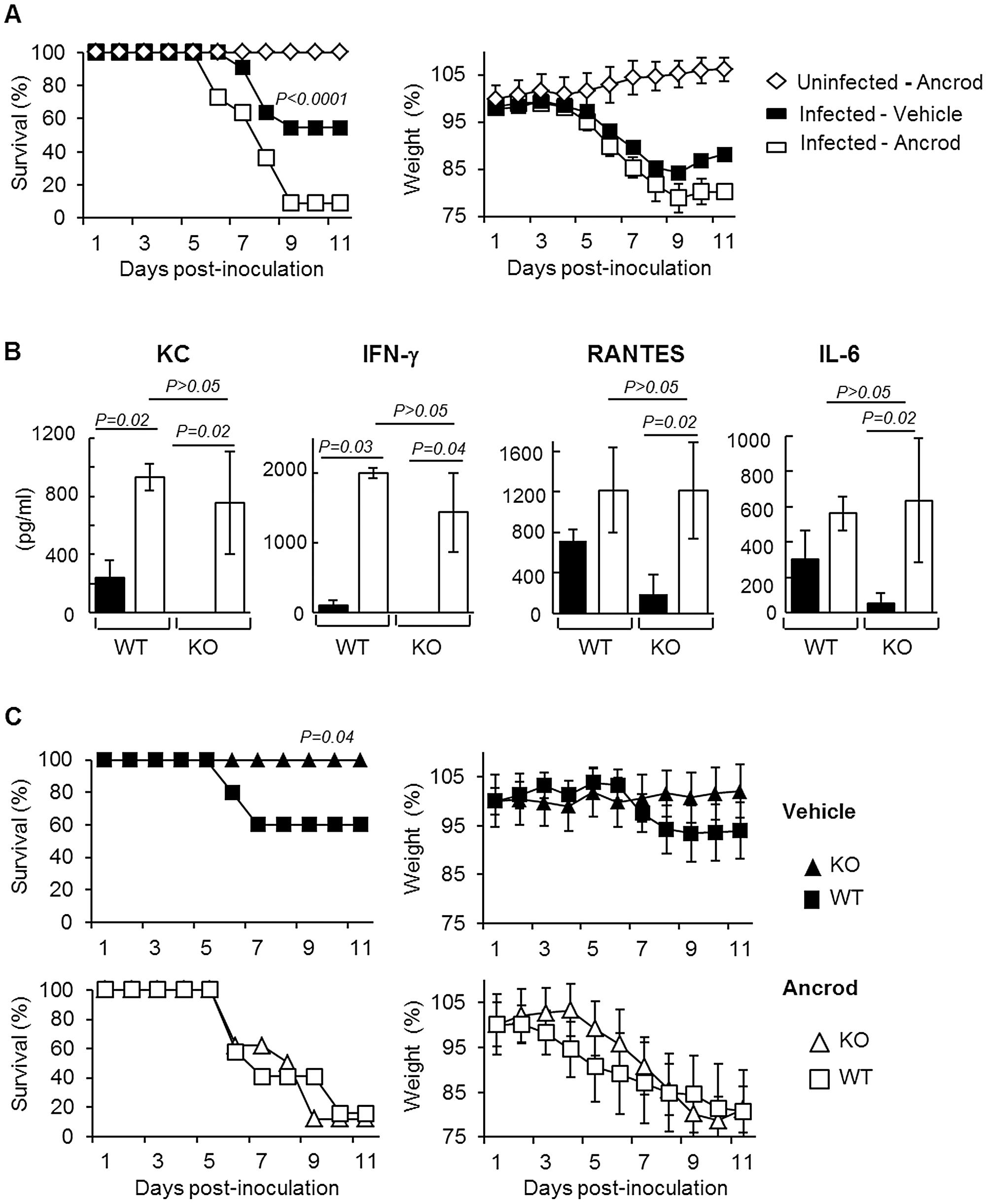 Effect of Ancrod treatment on inflammation and IAV pathogenesis.