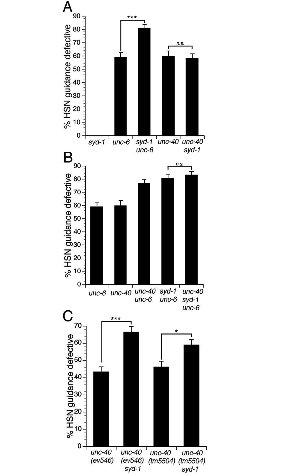 SYD-1 mediates UNC-6 independent UNC-40 signaling.
