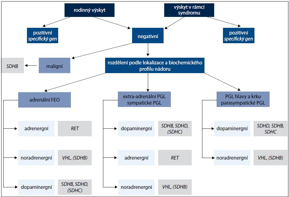 Algoritmus genetického vyšetření pacientů s feochromocytomem nebo paragangliomem.