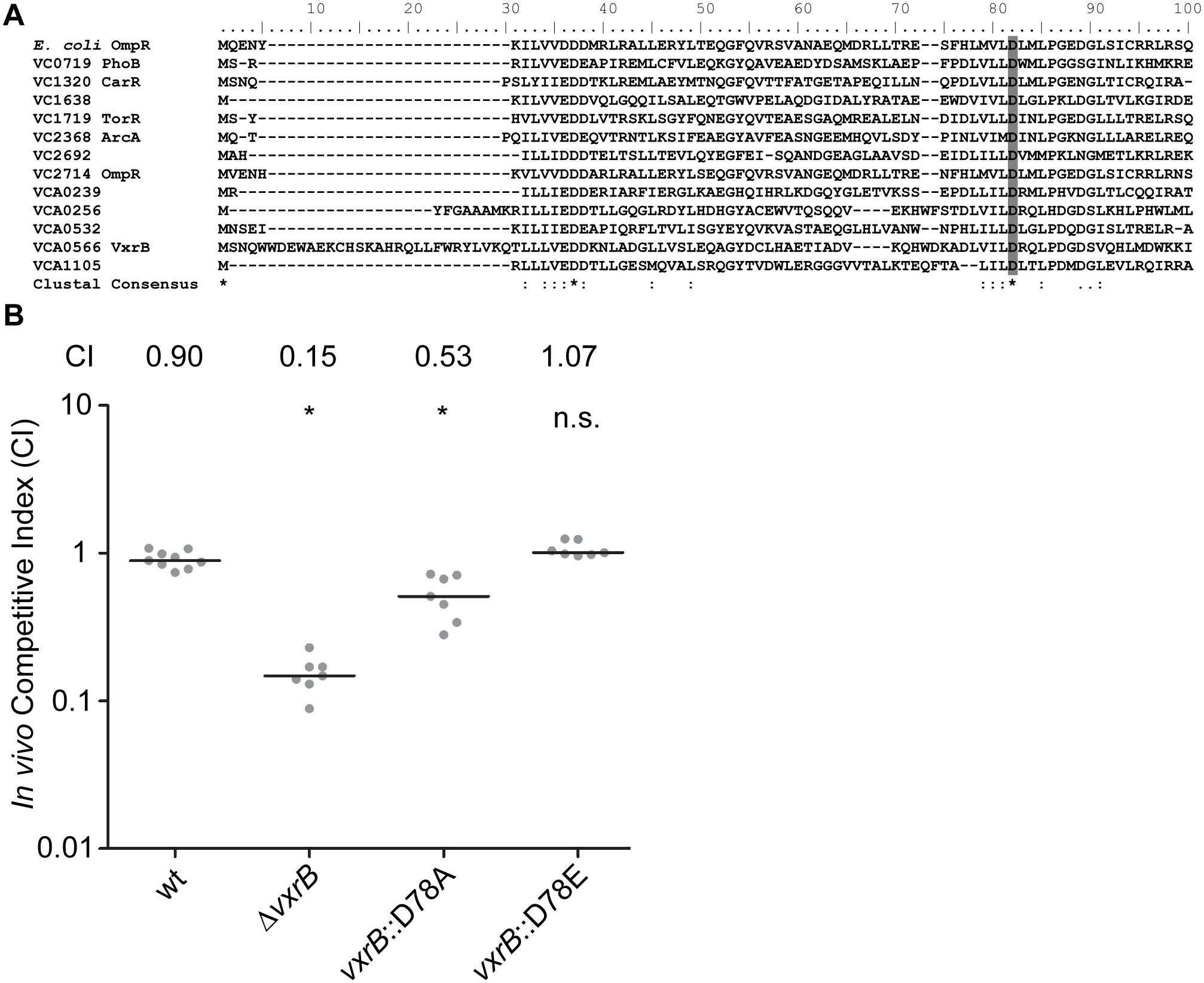 The role of the phosphorylation state of VxrB in colonization.
