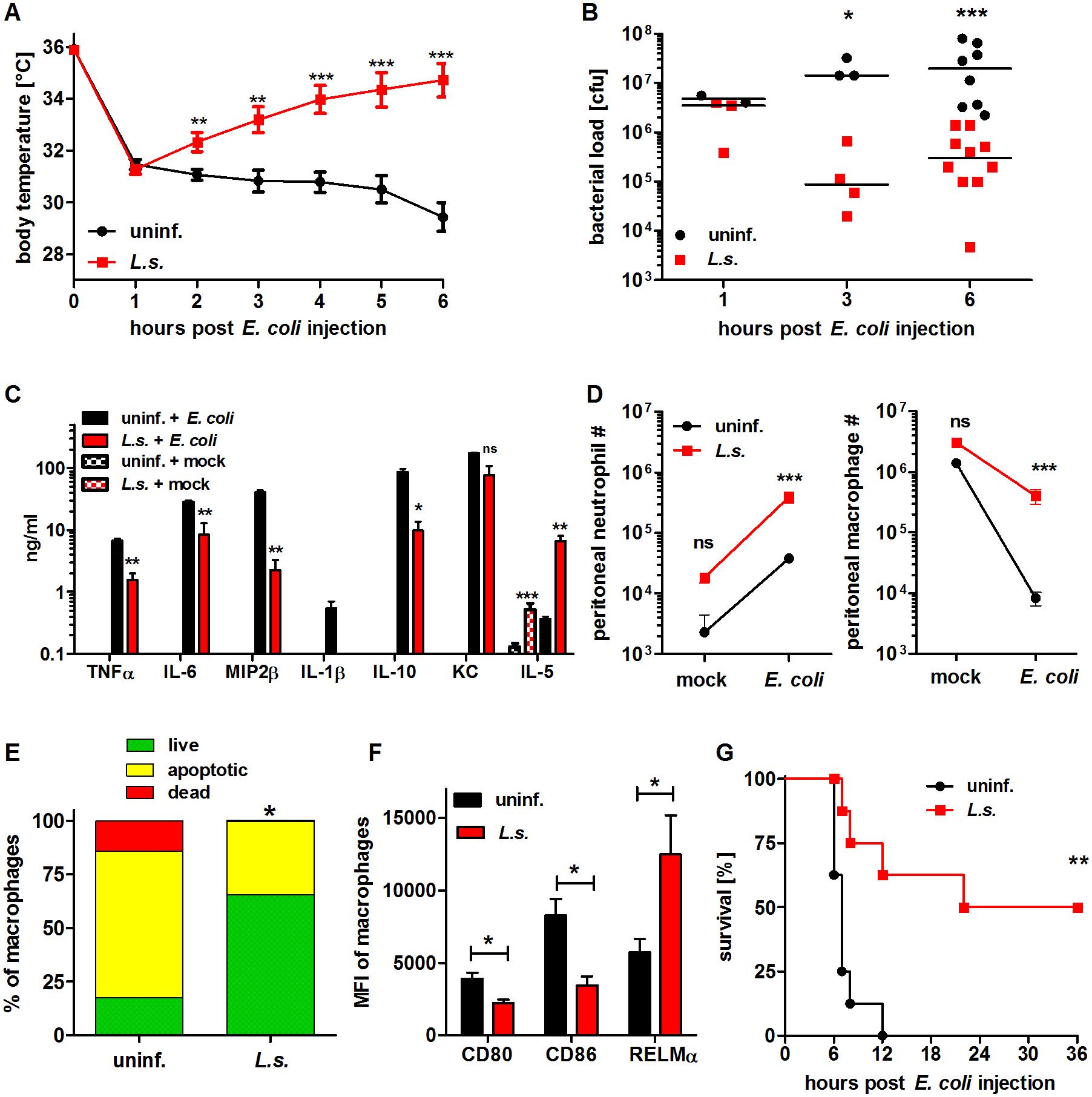 Chronic <i>L. sigmodontis</i> infection improves <i>E. coli</i>-induced sepsis.