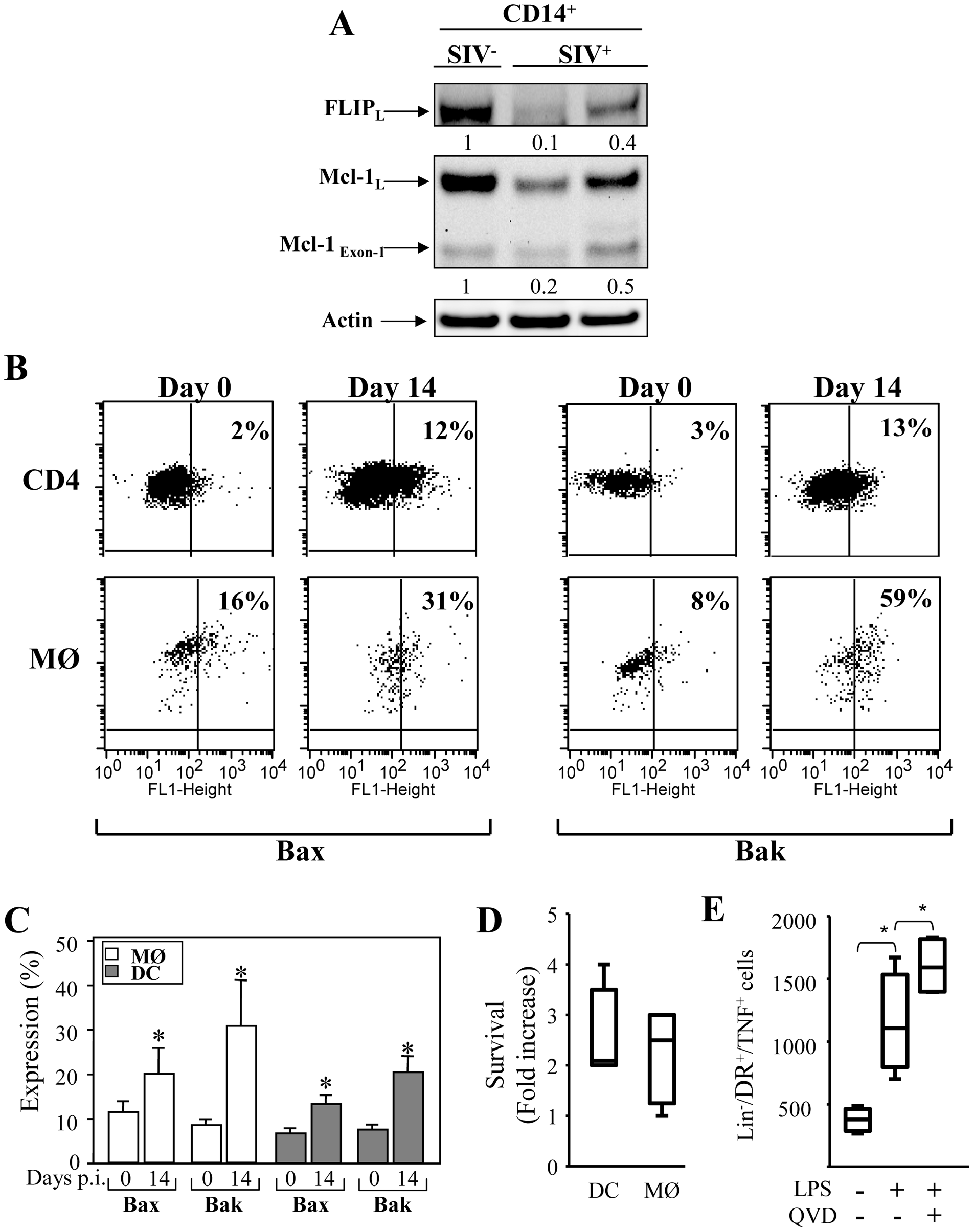 Expression of pro- and anti-apoptotic molecules in monocytes and mDCs during primary SIV infection.