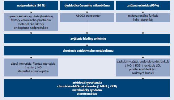 Schéma   Patofyziológia hyperurikémie a kardiorenálneho syndrómu