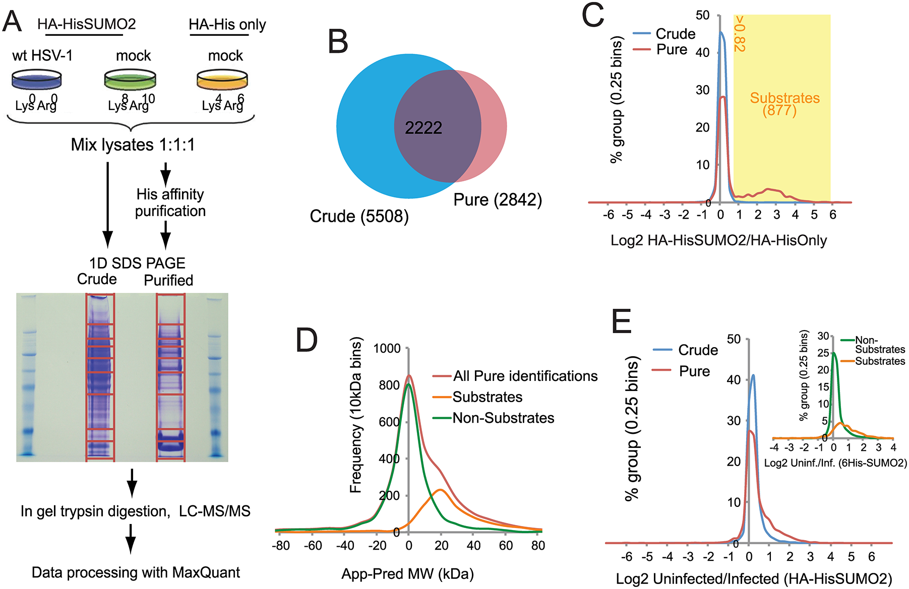 Overview of SILAC/Mass Spectrometry proteomics analysis comparing mock and wt HSV-1 infected HA-HisSUMO2 cells.