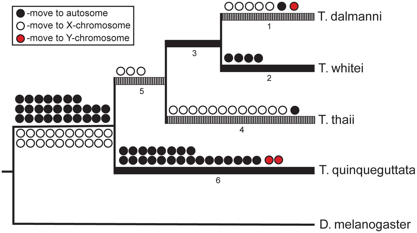 Gene movement in <i>Teleopsis</i>.