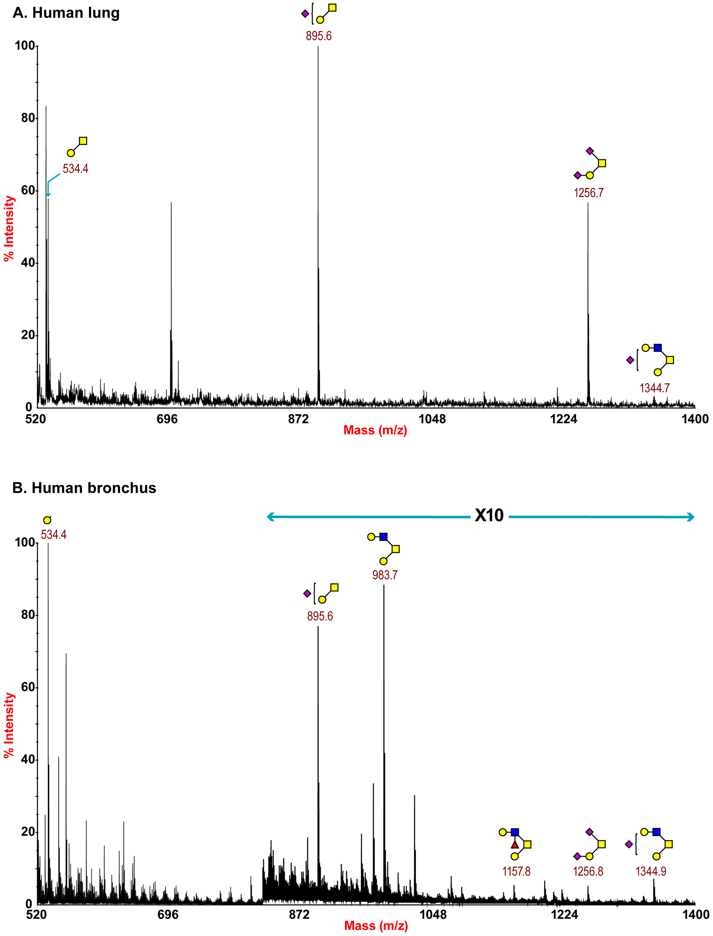 O-glycan profile of lung and bronchus.