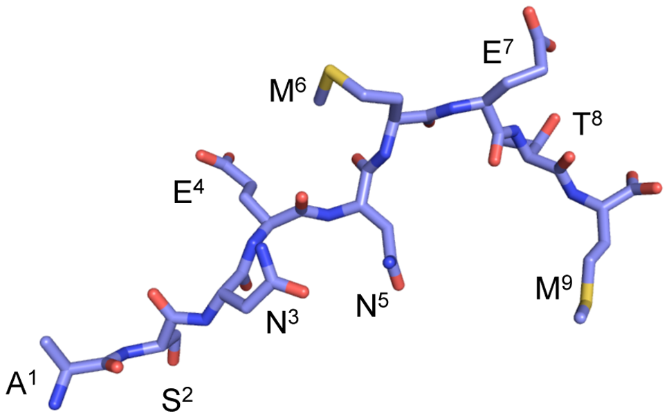 A stick conformation illustrating how the influenza NP<sub>366–374</sub> interacts with H-2D<sup>b</sup>.