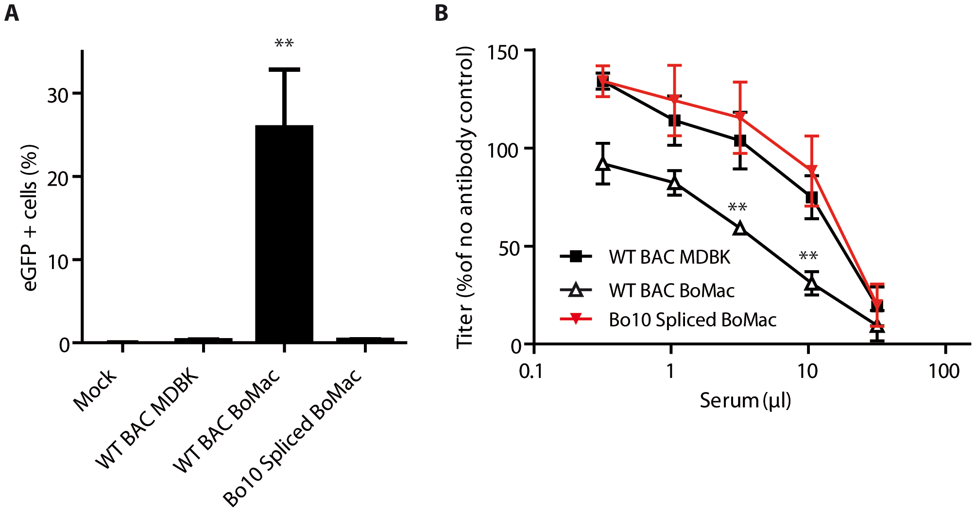 Expression of the spliced form of Bo10 mRNA reverts the phenotype of myeloid virions.