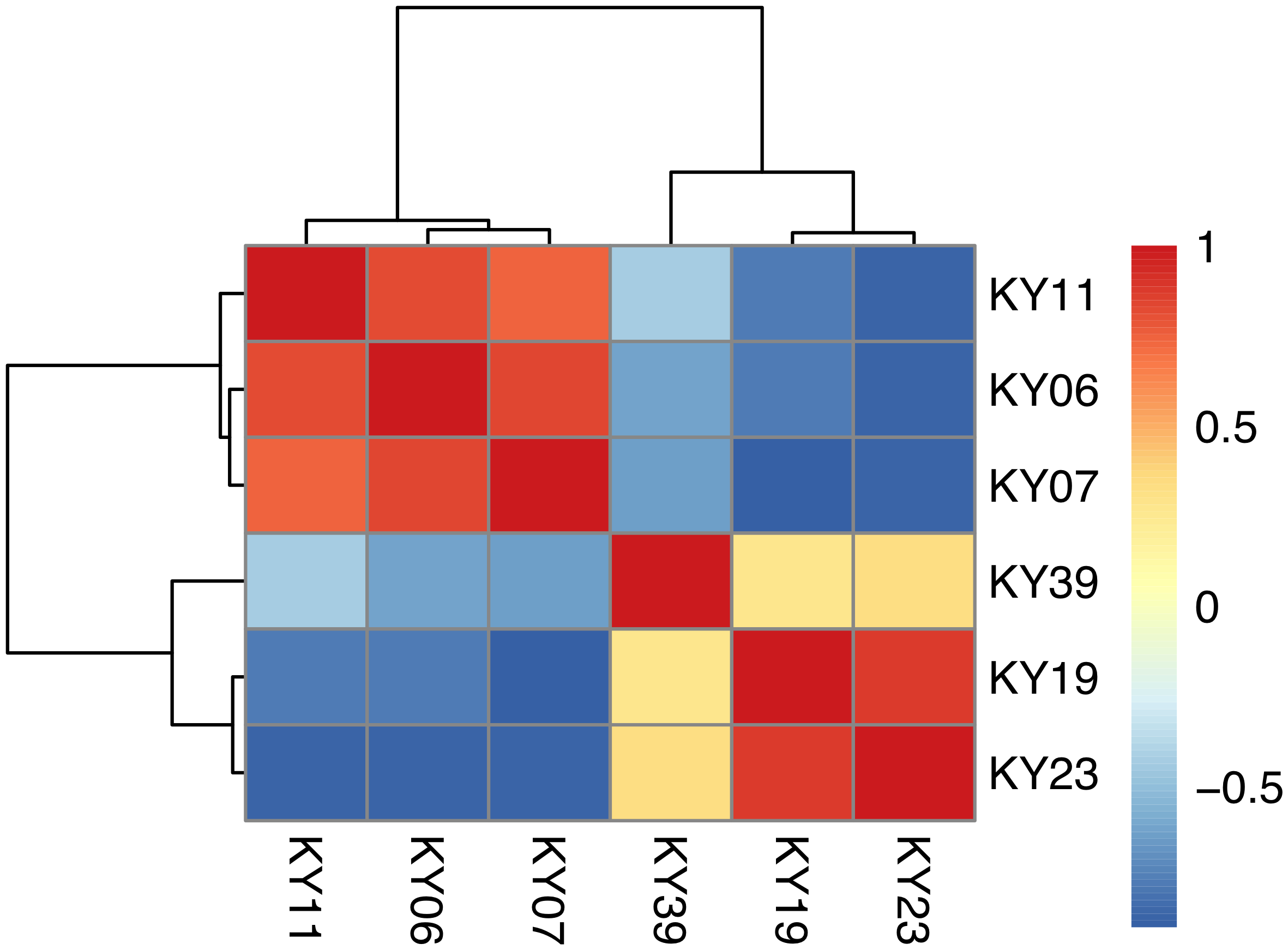 Hierarchical clustering of <i>Pd</i> gene expression on bats with WNS.