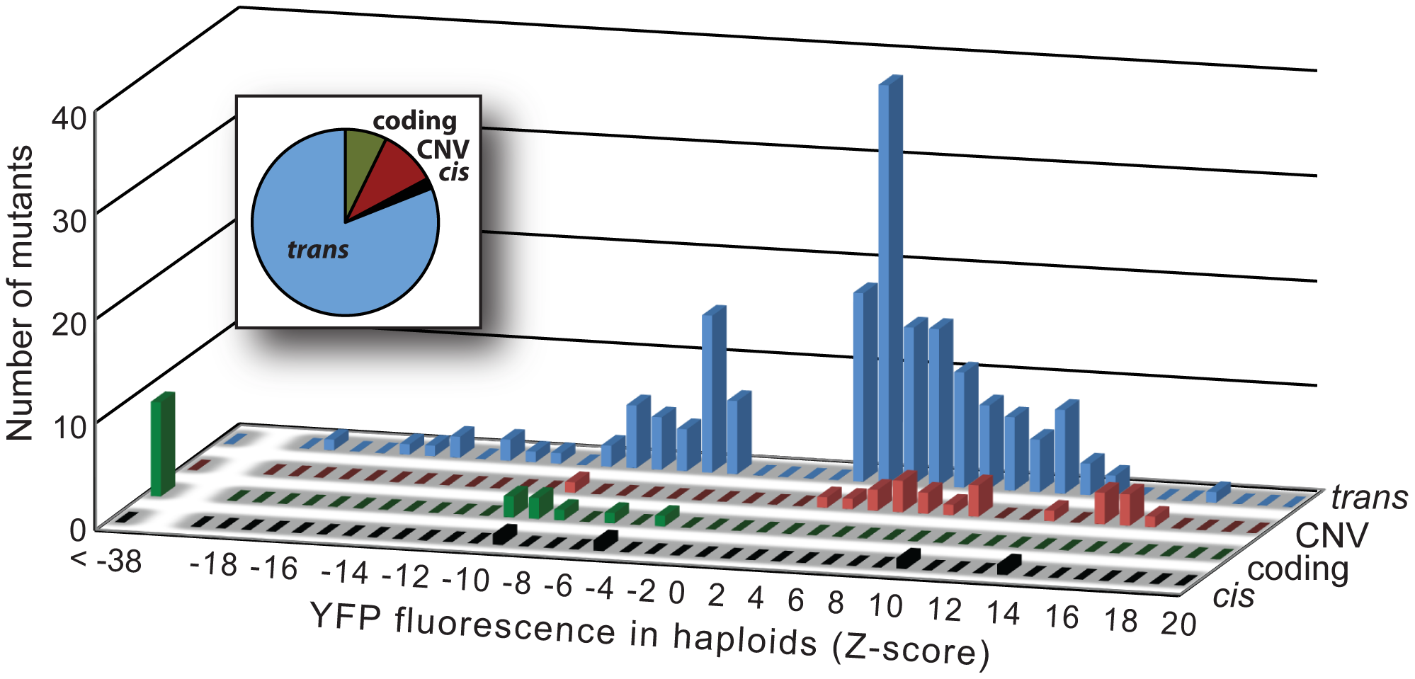 Effects on YFP fluorescence in haploid cells differ among mutational classes.