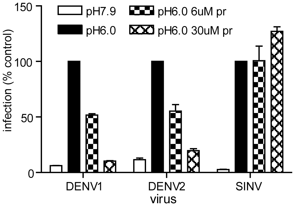 Pr peptide inhibits DENV fusion and infection.