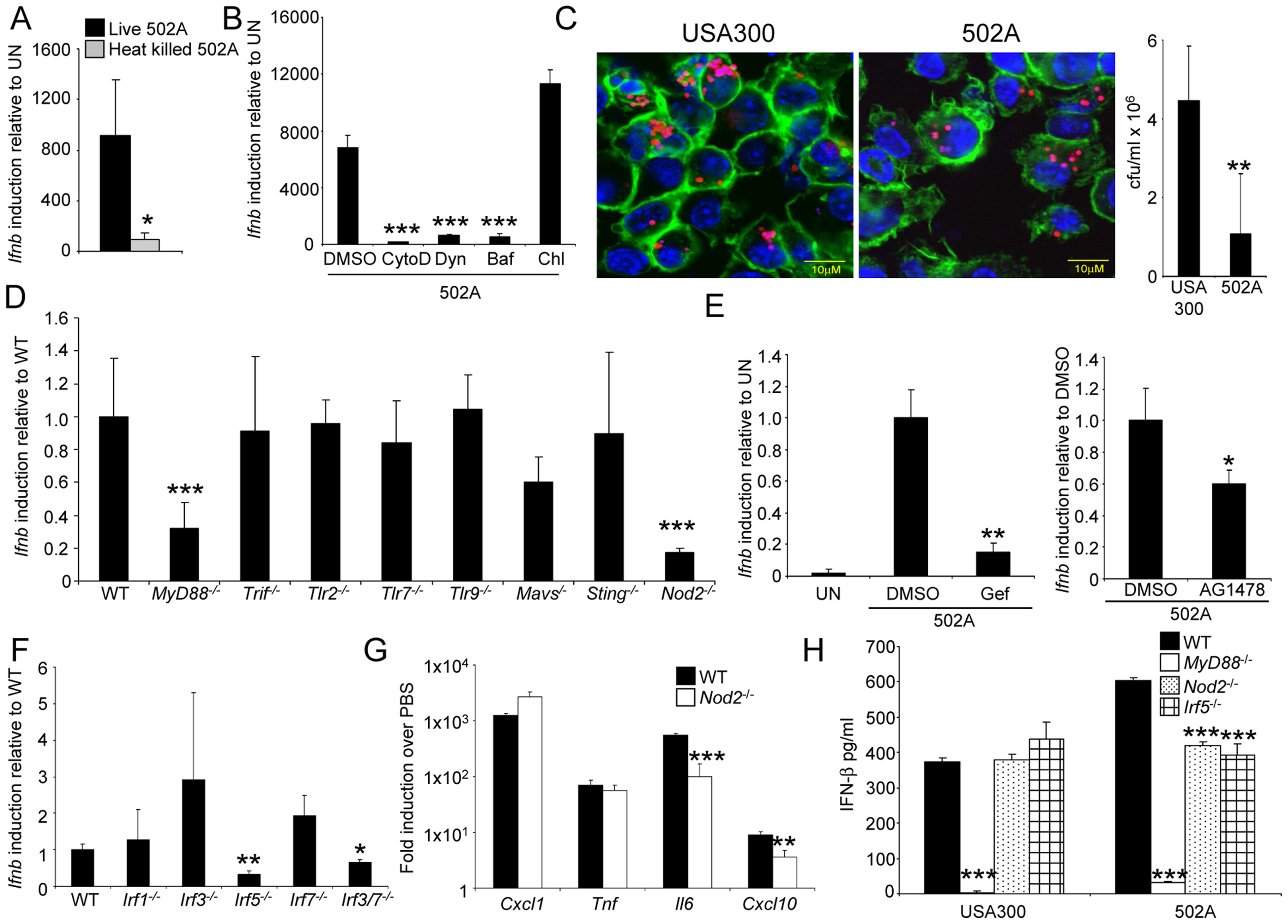 Induction of type I IFN by 502A requires endocytosis, Nod2 and IRF5.