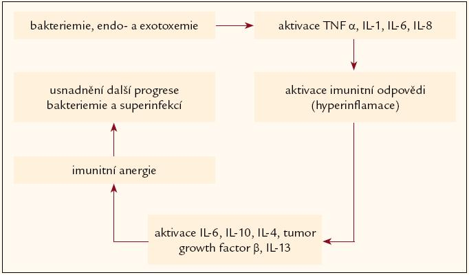 Aktivace a deprese imunitních dějů v průběhu šoku, hypotetický circulus vitiosus.
