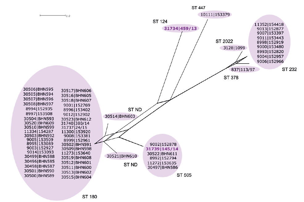 Dendrogram Streptococcus pneumoniae sérotypu 3 na podkladě MLST charakteristik, ČR, 1995–2014<br>