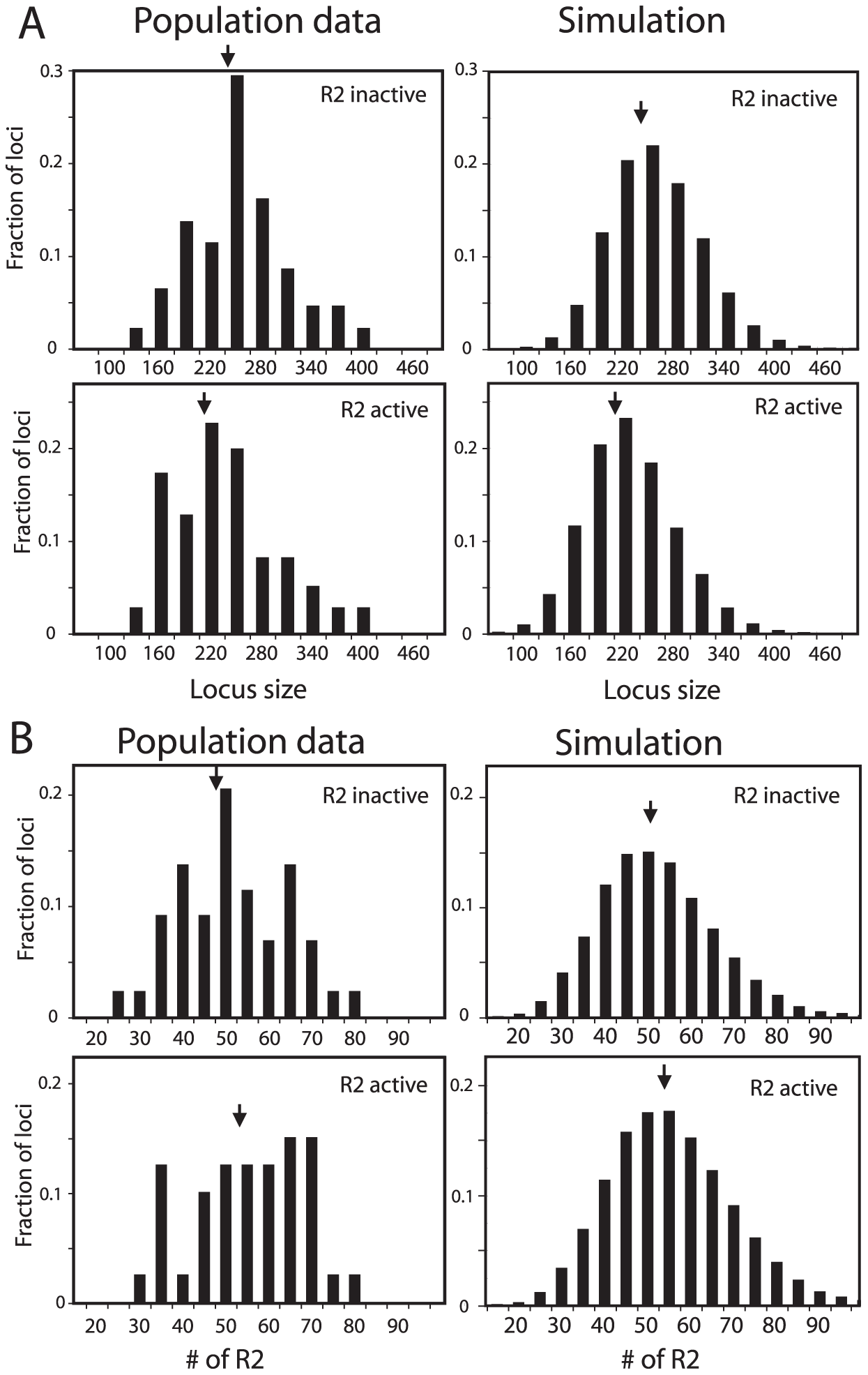 Comparison of the rDNA locus size and R2 number in R2-active and R2-inactive individuals.