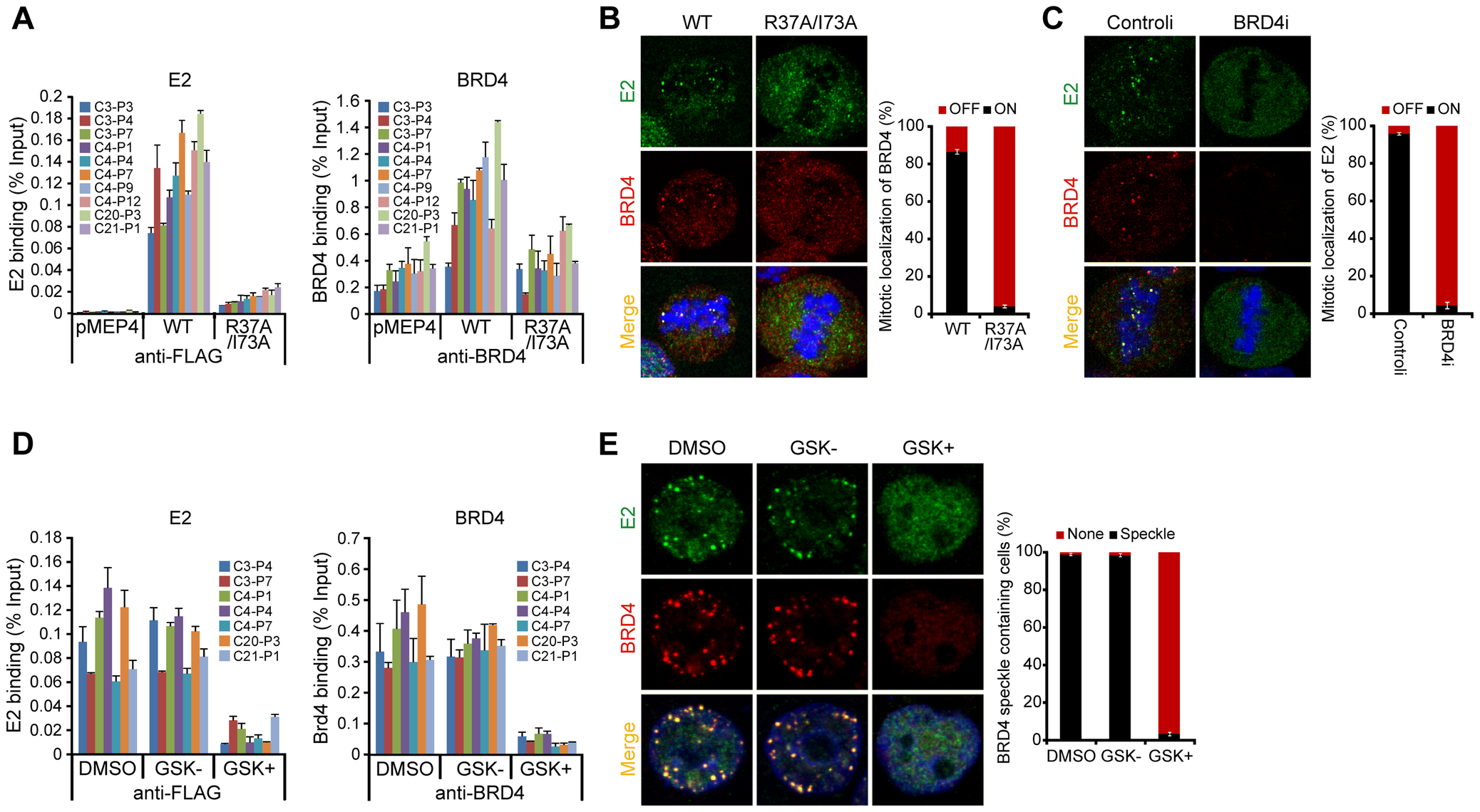 BRD4 is essential for persistent HPV1 E2 binding to host mitotic chromatin.