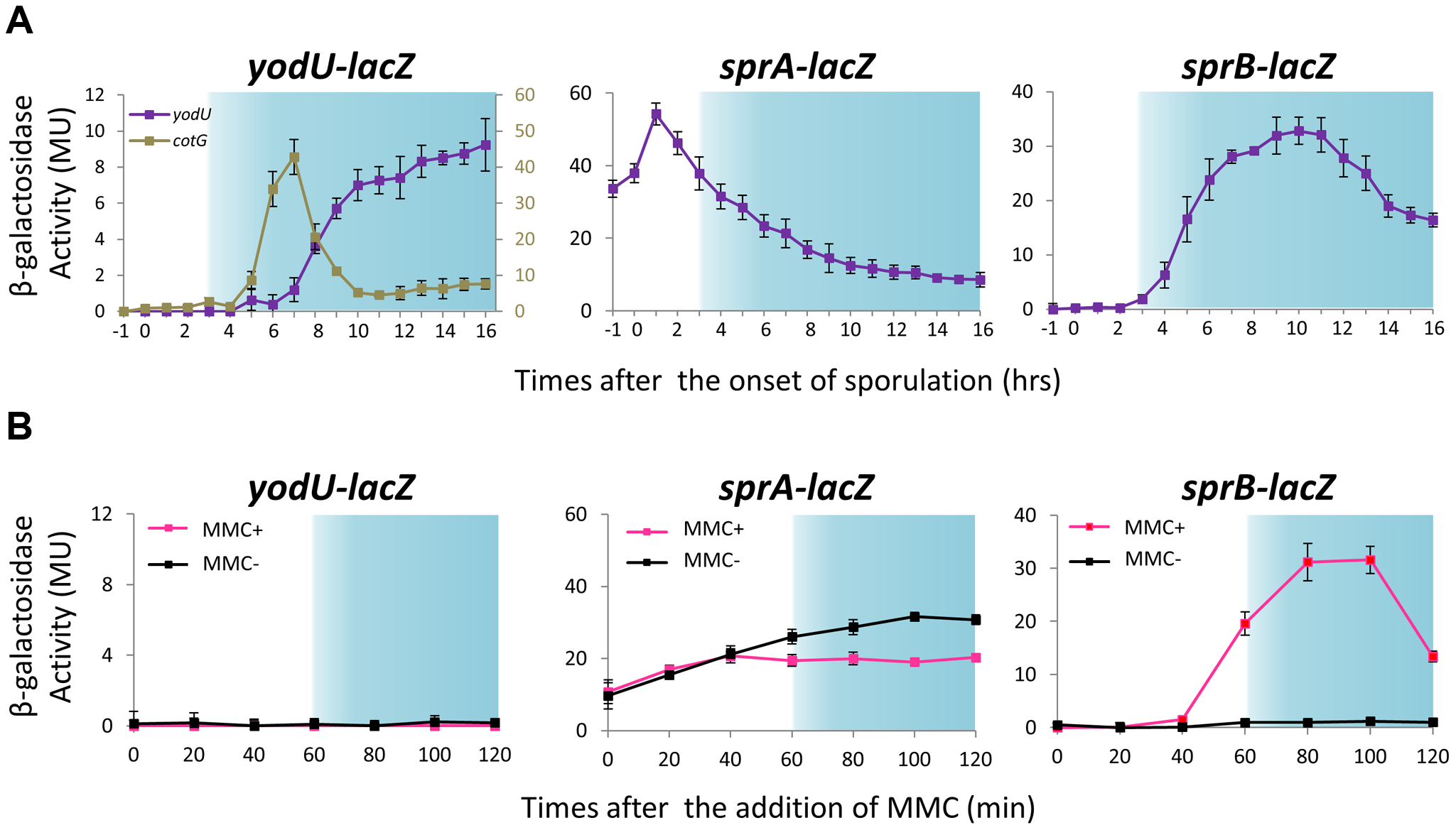 Expression of <i>spsM</i>, <i>sprA</i>, and <i>sprB</i> in response to mitomycin C treatment and during sporulation.