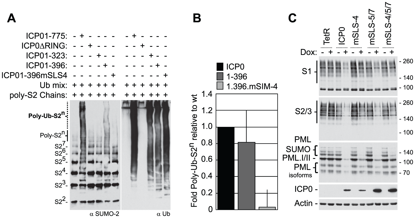 SLS-4 is required for the <i>in vitro</i> ubiquitination of poly-SUMO-2 chains and degradation of SUMO conjugates <i>in vivo</i>.